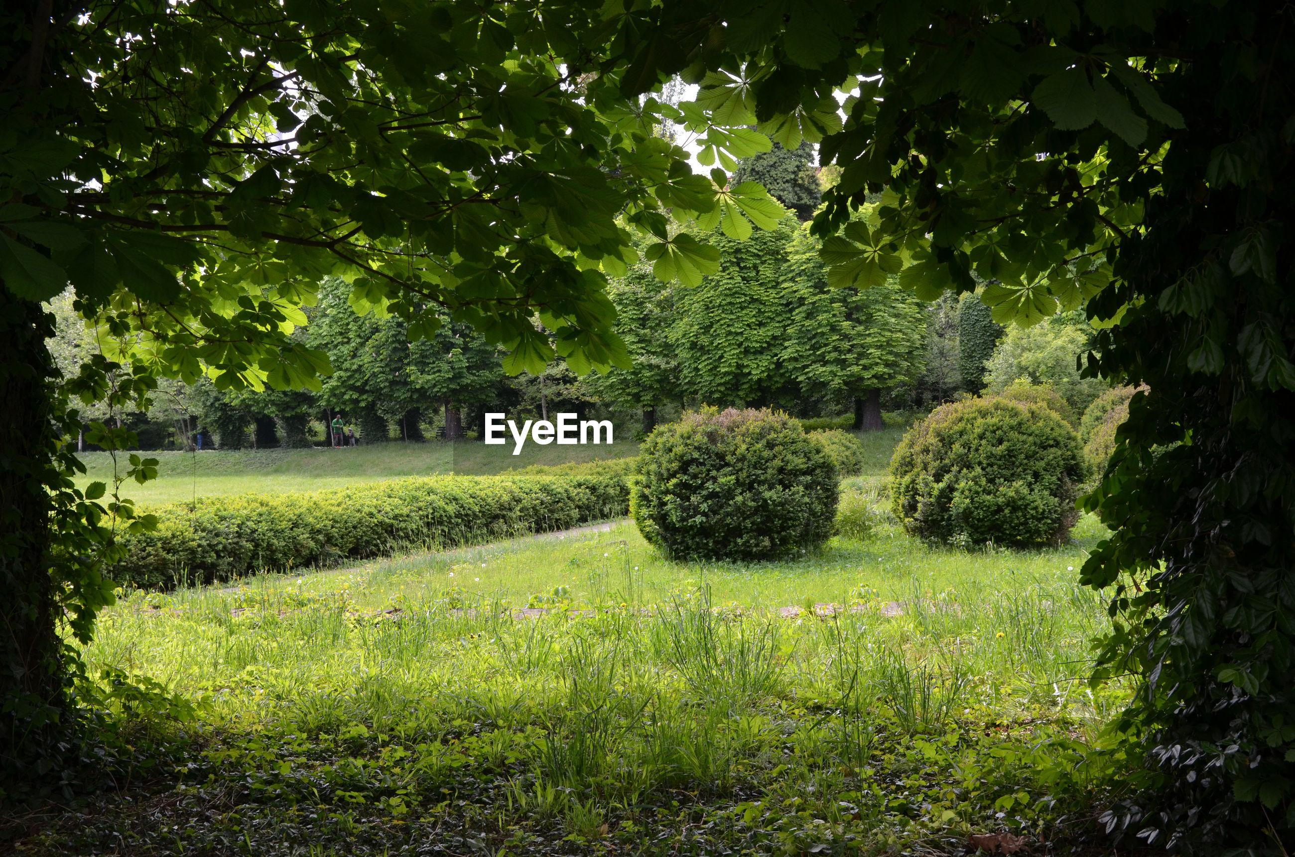 View of trees in garden