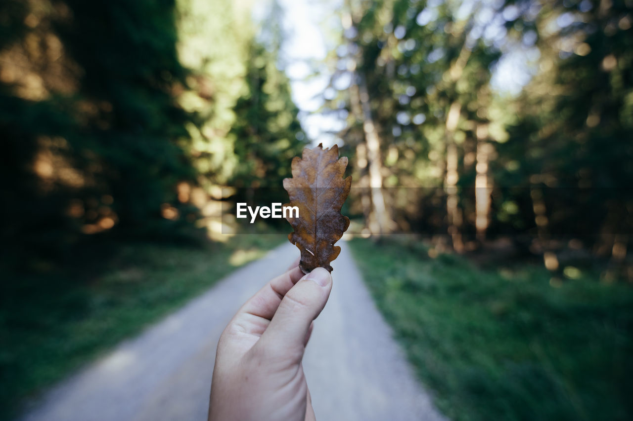 human hand, hand, one person, plant, human body part, day, real people, focus on foreground, close-up, holding, leaf, nature, plant part, tree, personal perspective, lifestyles, body part, unrecognizable person, land, leisure activity, outdoors, finger, change, human limb, leaves, coniferous tree