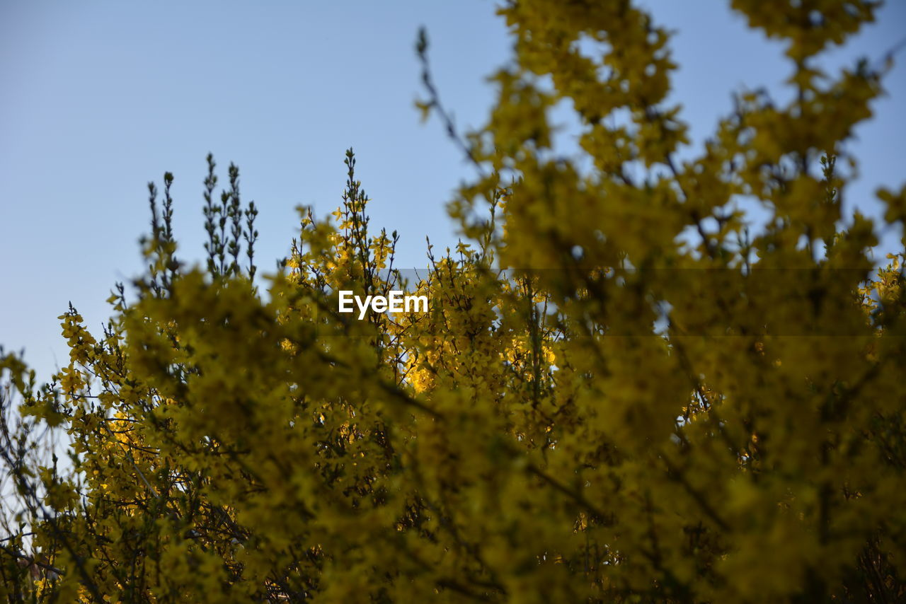 plant, growth, beauty in nature, tree, yellow, sky, low angle view, flower, flowering plant, no people, selective focus, nature, fragility, vulnerability, day, close-up, freshness, tranquility, outdoors, branch