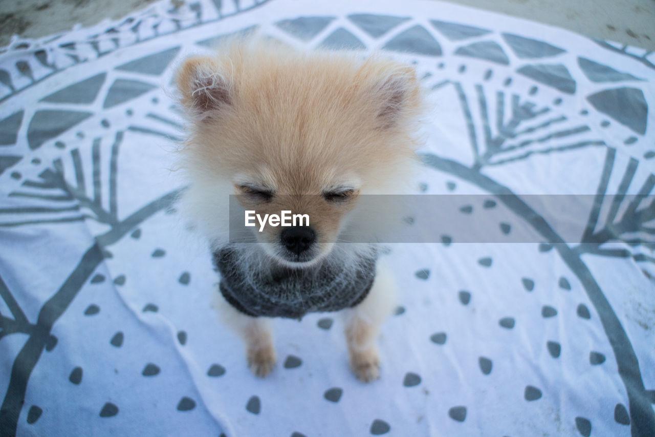 High Angle View Portrait Of Dog