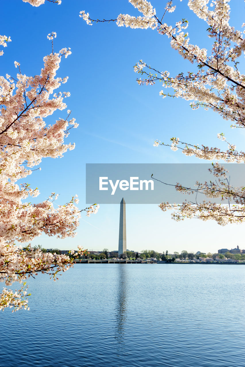 Cherry Blossoms Blooming By Lake With Washington Monument Against Sky