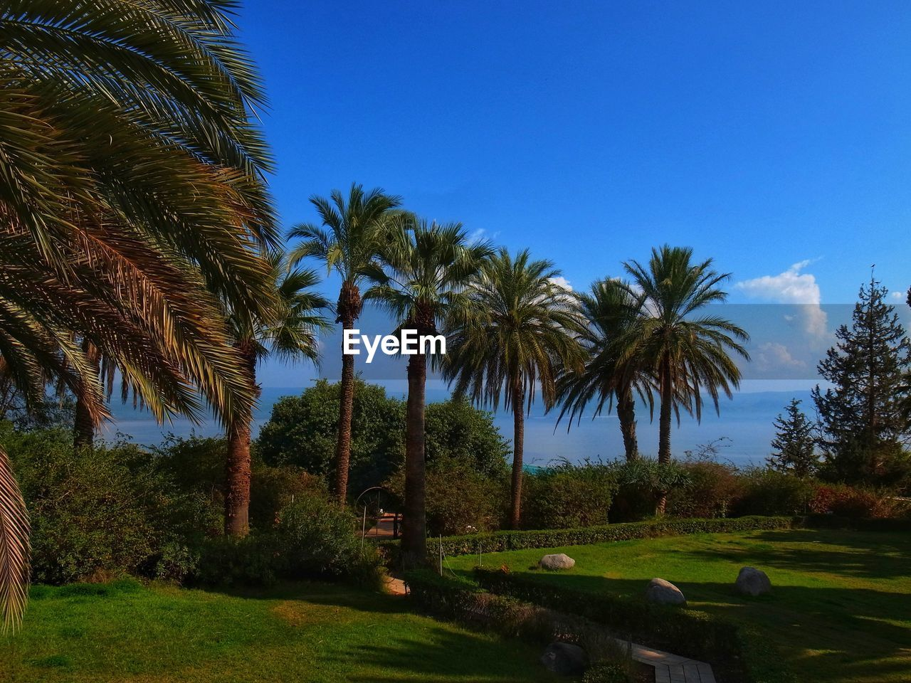 tree, plant, sky, palm tree, tropical climate, growth, beauty in nature, nature, tranquility, blue, clear sky, tranquil scene, grass, green color, scenics - nature, land, landscape, no people, environment, day, outdoors, coconut palm tree, palm leaf