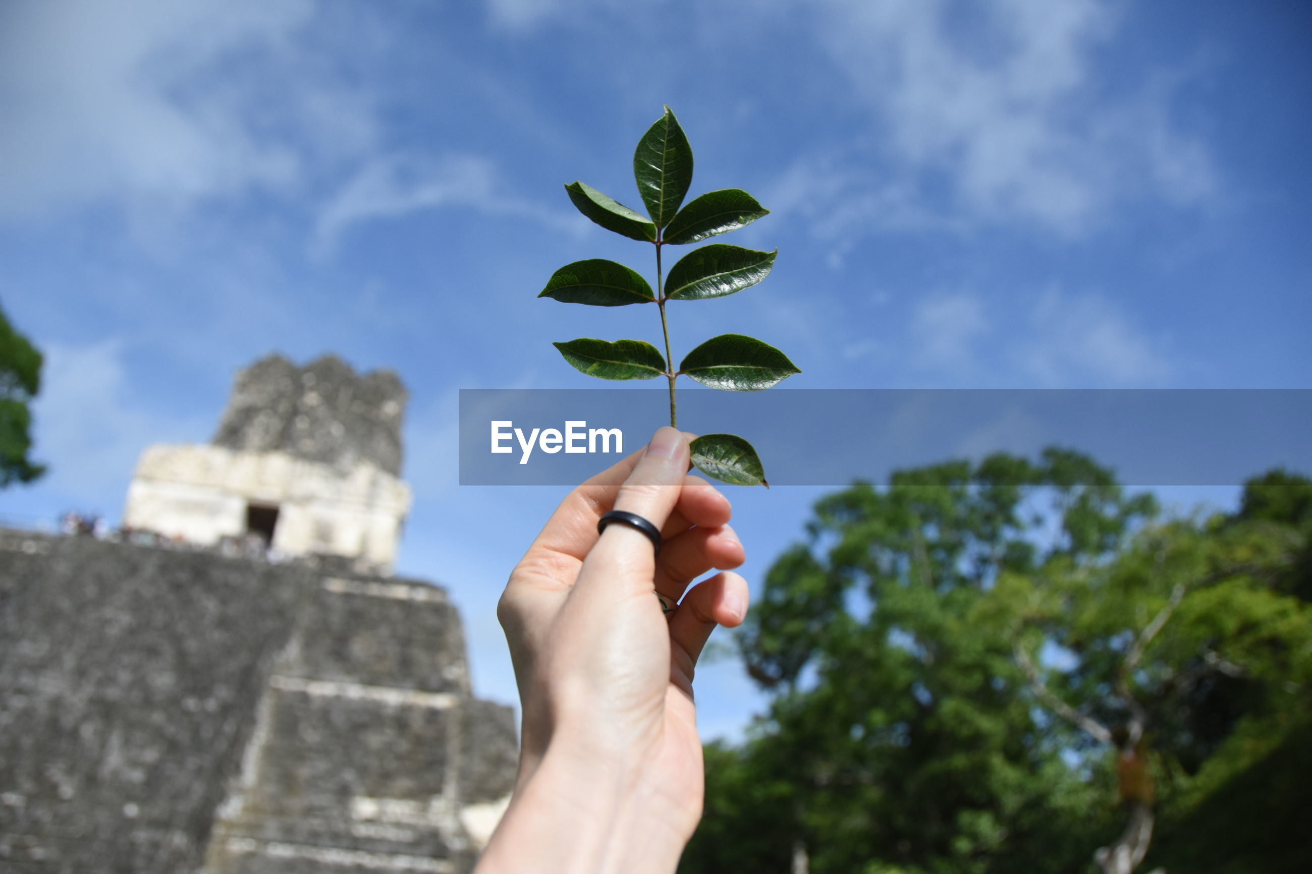 Cropped hand of woman holding plant against sky
