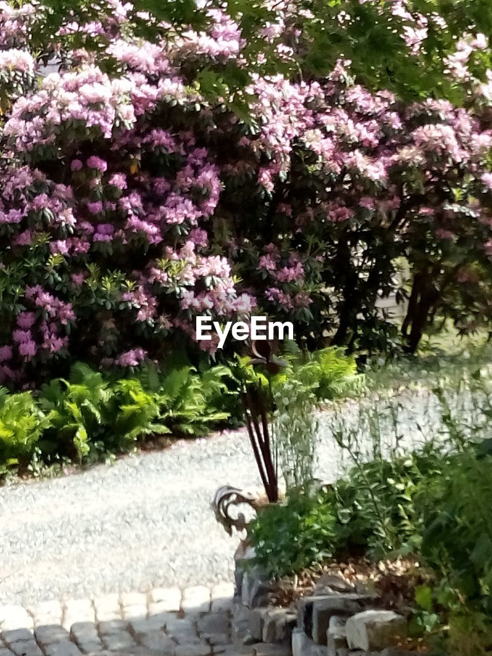 growth, nature, flower, no people, tree, plant, day, beauty in nature, pink color, fragility, outdoors, freshness