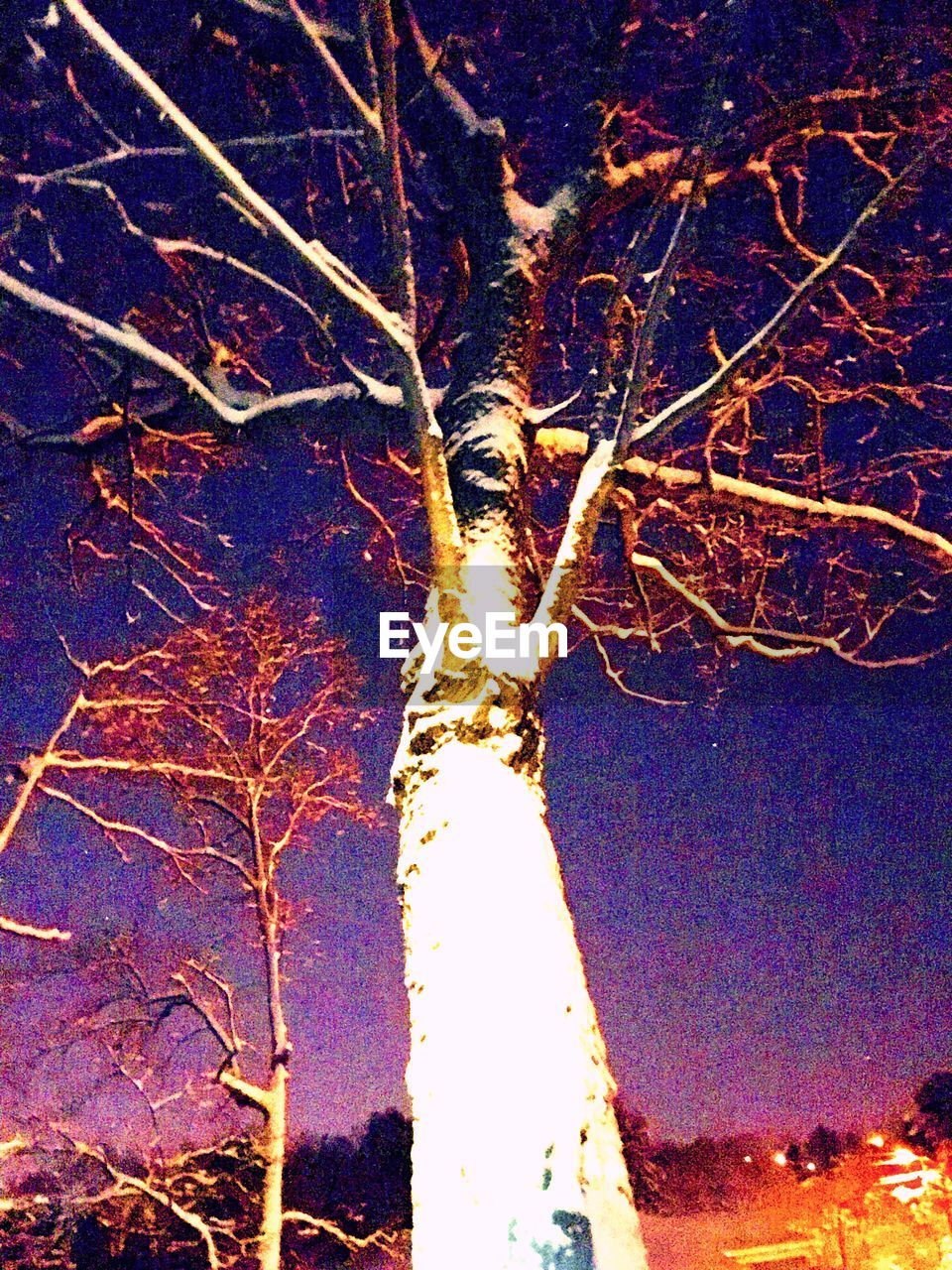 night, nature, outdoors, no people, tree, beauty in nature, illuminated, winter, branch, tranquility, growth, cold temperature, close-up, sky, freshness