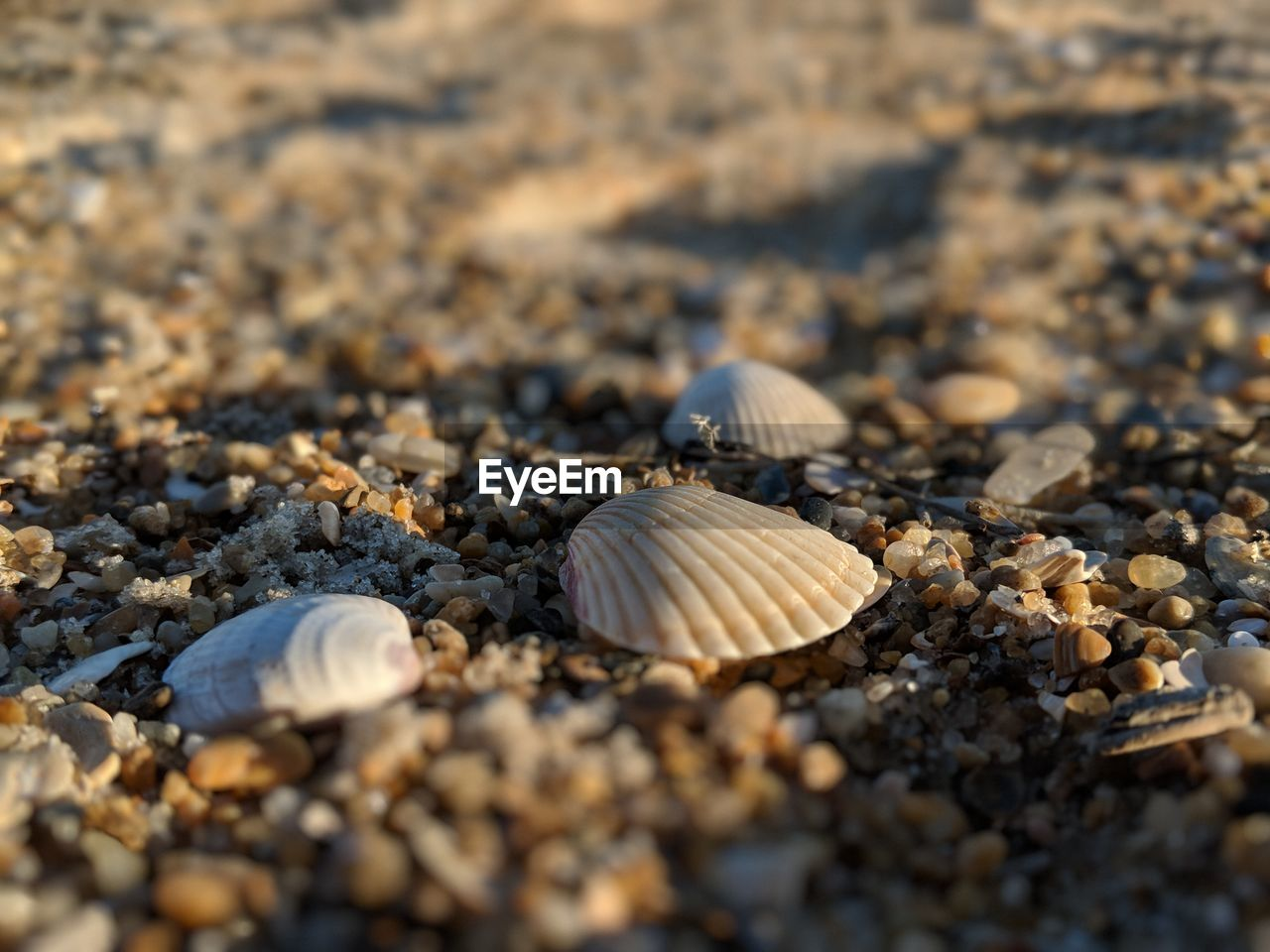 shell, animal shell, land, seashell, animal wildlife, beach, close-up, selective focus, no people, day, solid, rock, nature, animal, beauty in nature, sand, stone - object, pebble, outdoors, textured, surface level, marine