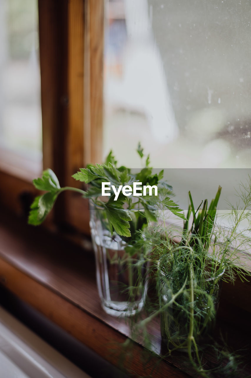 glass - material, no people, indoors, leaf, close-up, plant, table, green color, food and drink, freshness, transparent, nature, plant part, food, herb, window, selective focus, growth, window sill, wood - material, glass, mint leaf - culinary