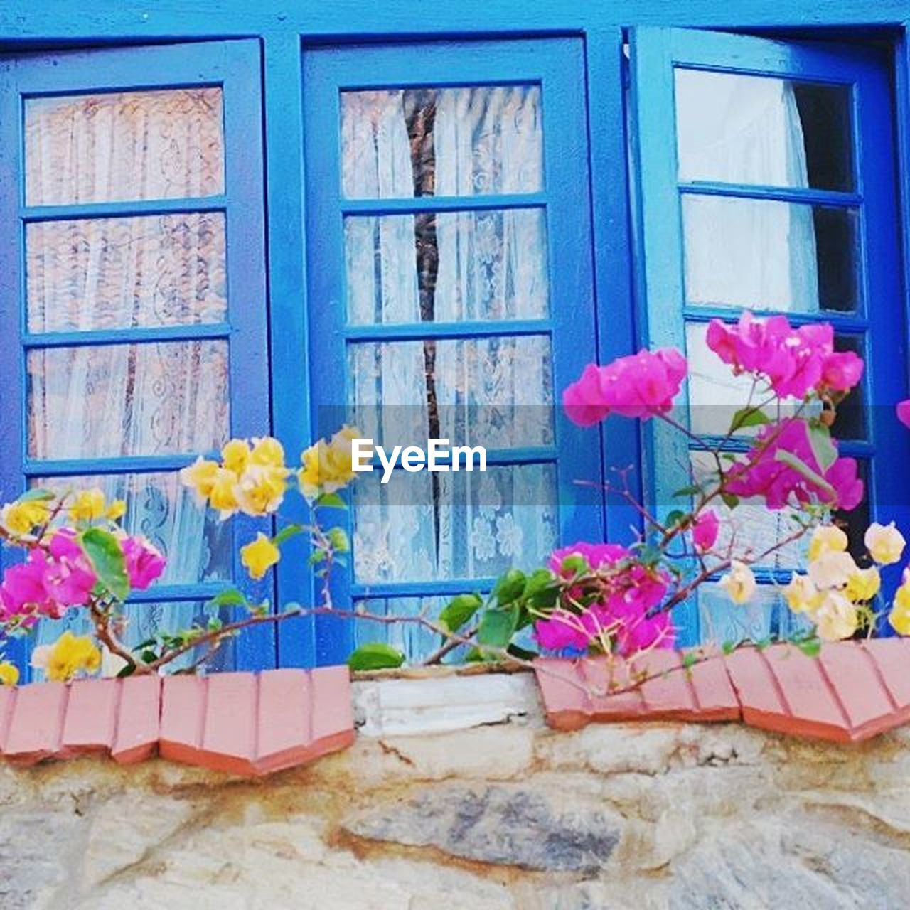 flower, window, multi colored, pink color, no people, architecture, blue, plant, built structure, day, building exterior, fragility, freshness, flower head, window box, nature, outdoors, beauty in nature, close-up