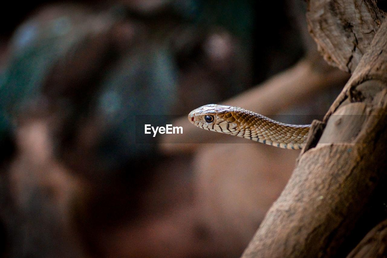 Close-Up Of Snake Behind Log