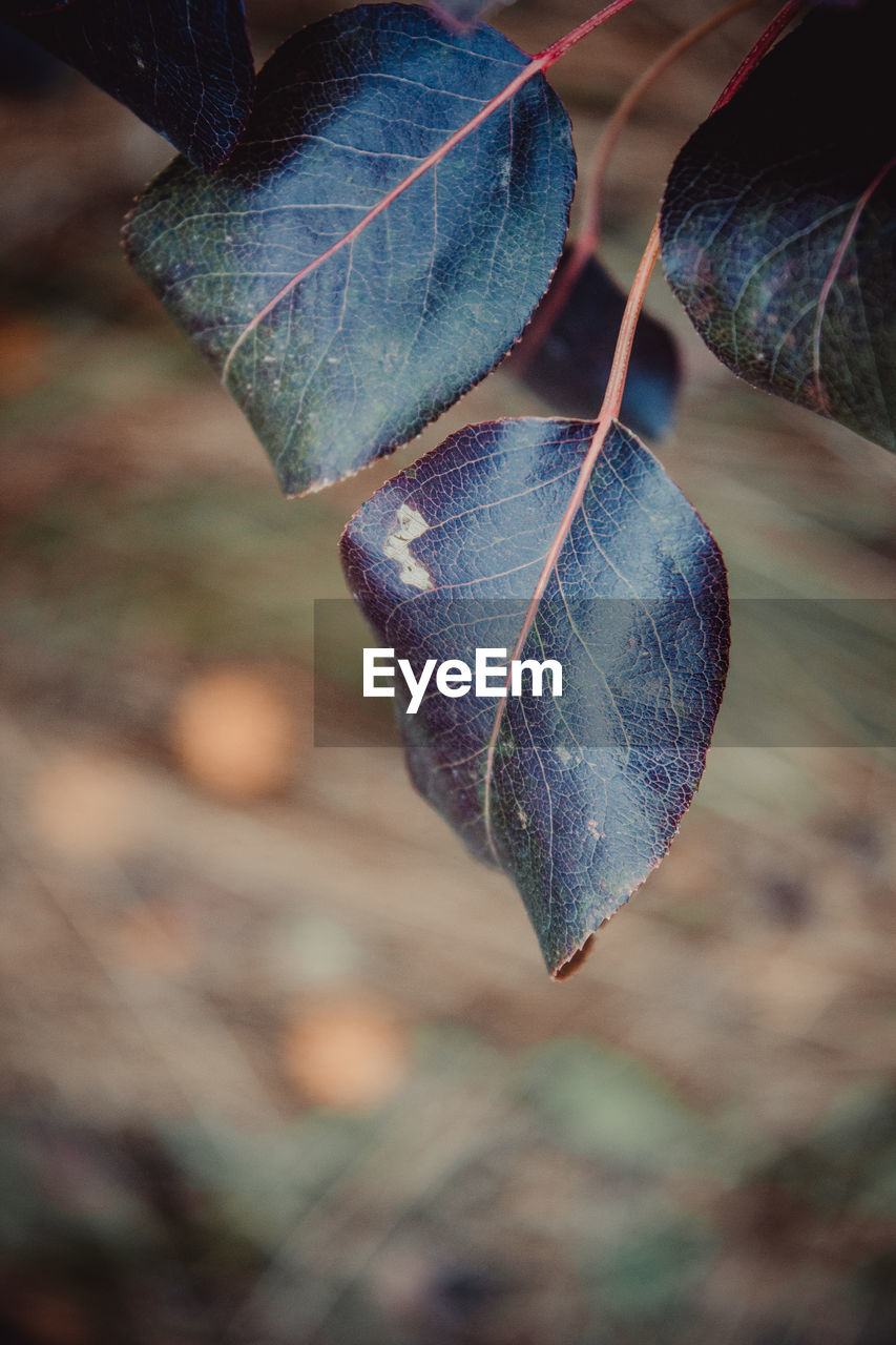 leaf, plant part, close-up, focus on foreground, plant, nature, day, no people, growth, beauty in nature, leaf vein, dry, outdoors, tree, autumn, tranquility, fragility, vulnerability, selective focus, natural pattern, change, leaves