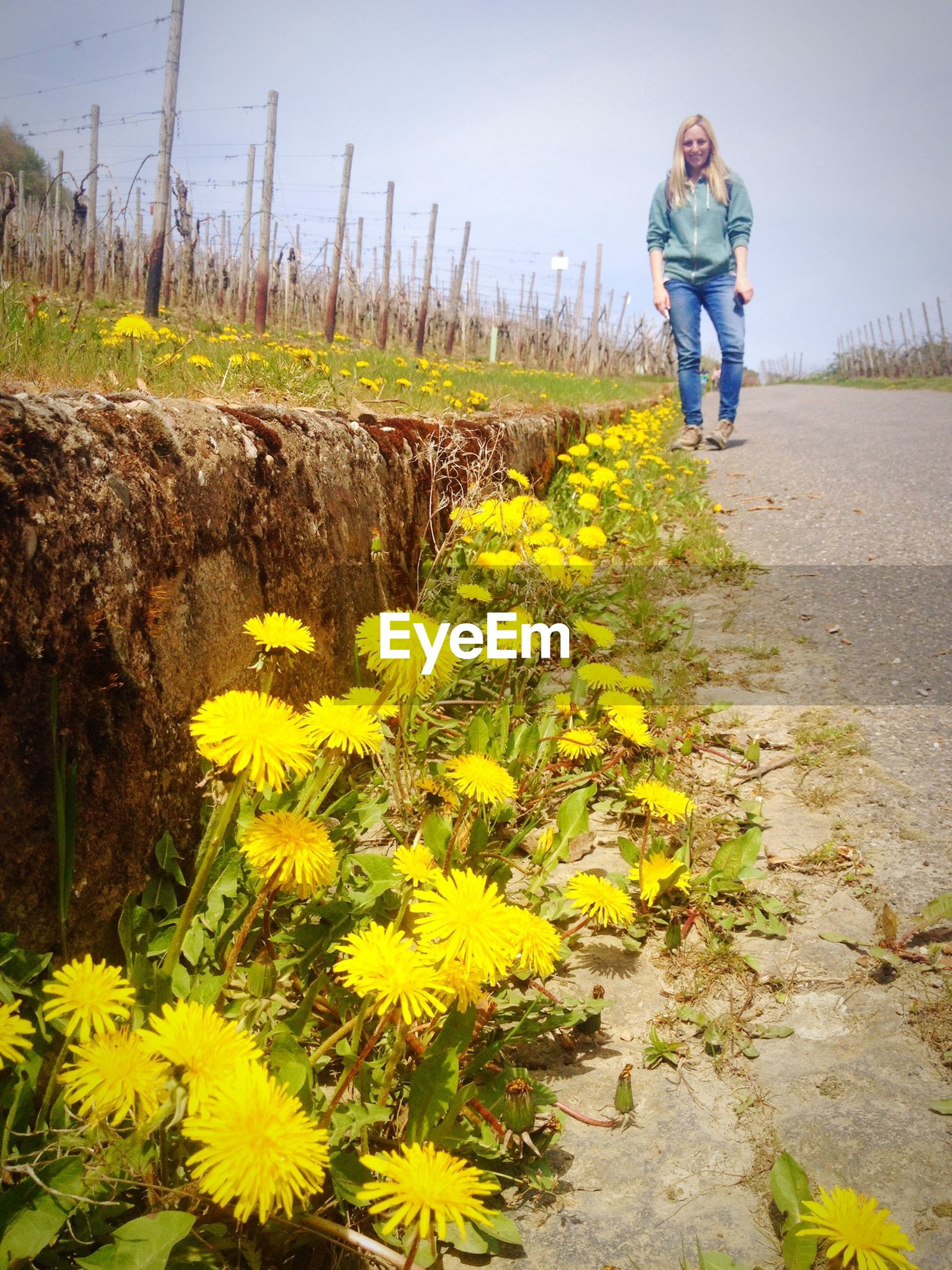 lifestyles, leisure activity, casual clothing, full length, flower, field, rear view, plant, childhood, yellow, growth, agriculture, men, standing, nature, walking, elementary age