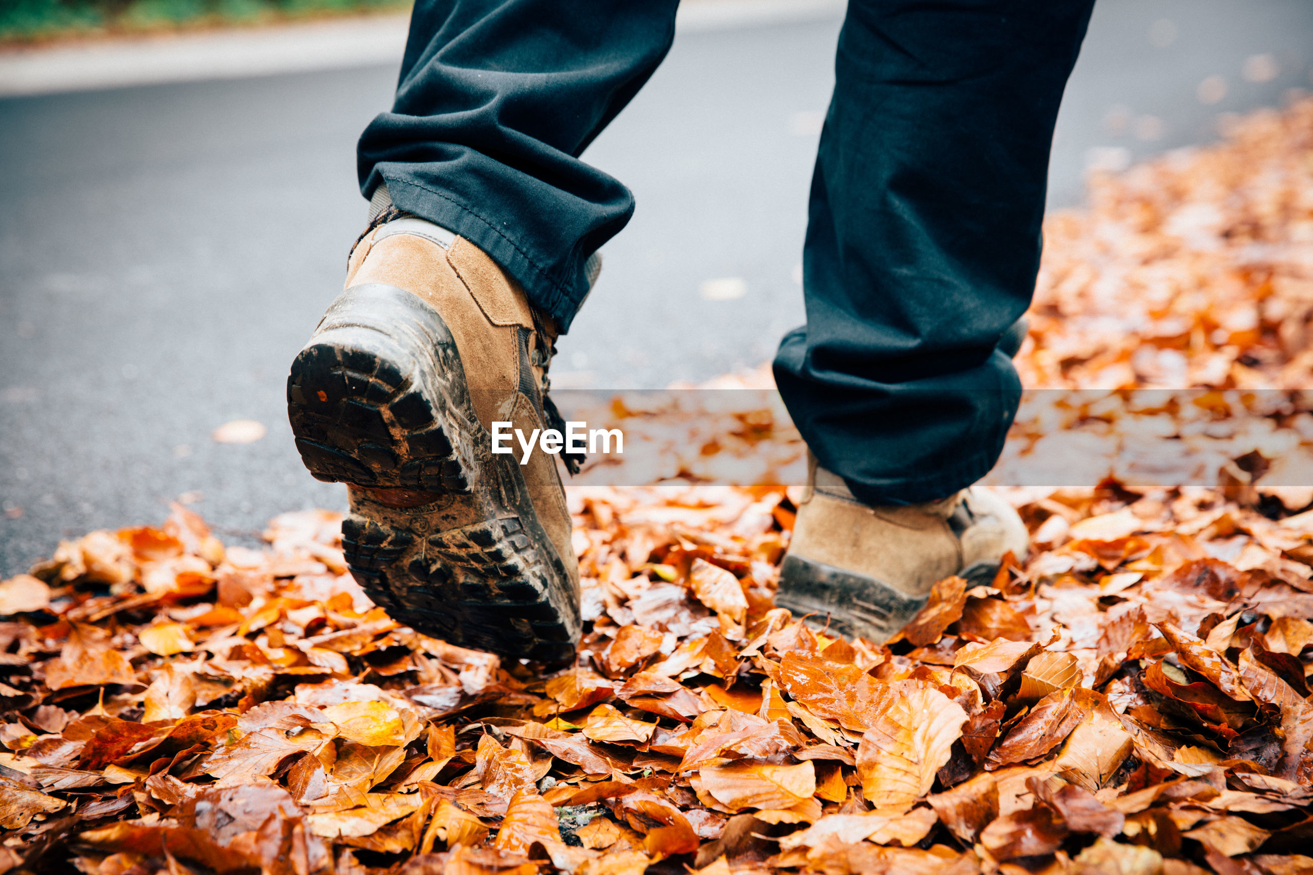 Low section of man walking on dry leaves