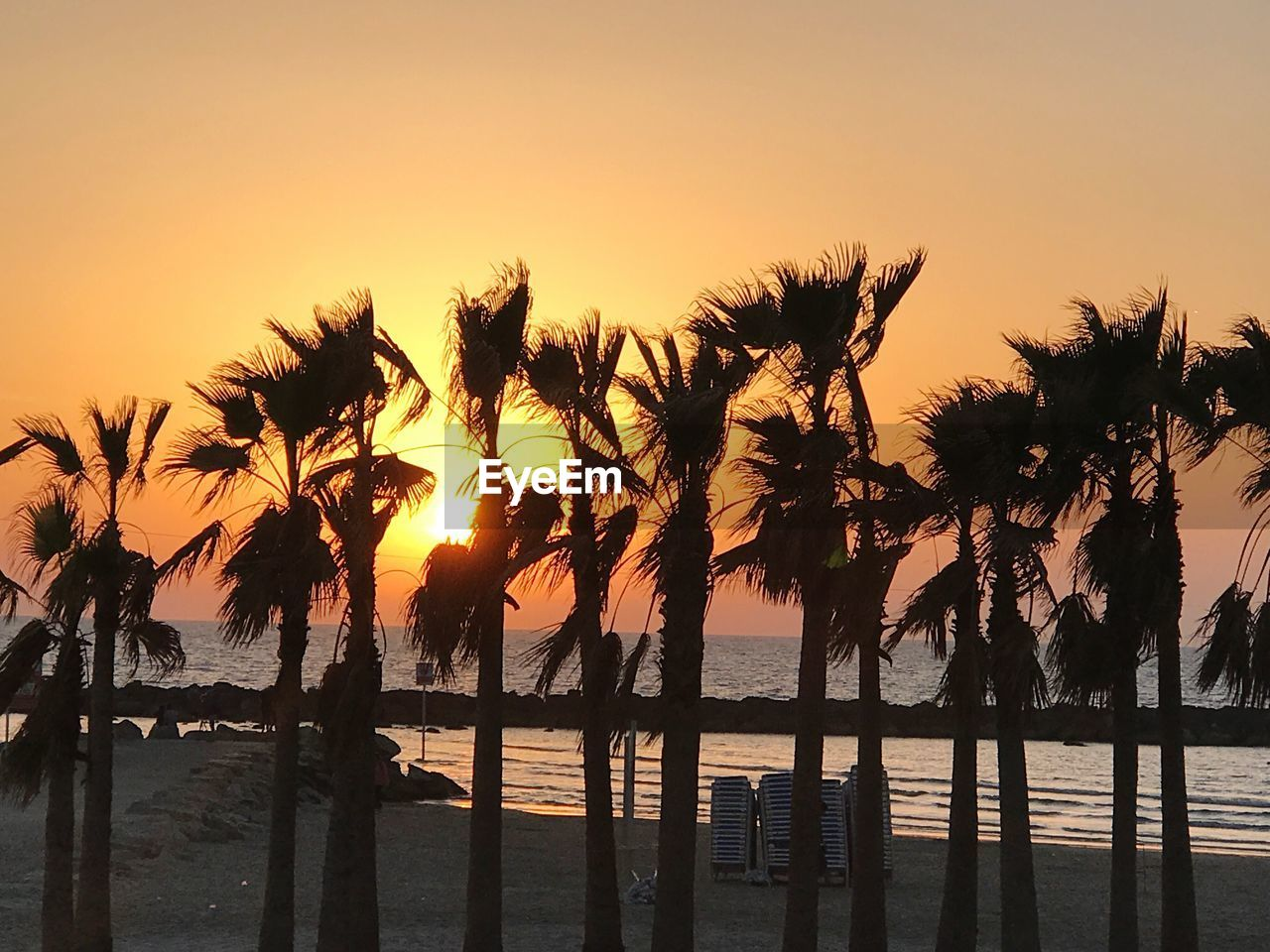 sunset, tree, beauty in nature, scenics, nature, tranquil scene, tranquility, sea, silhouette, palm tree, water, no people, outdoors, beach, sky, growth, horizon over water, day