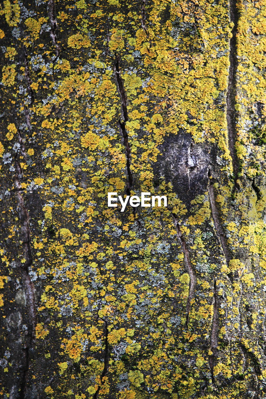 yellow, full frame, backgrounds, textured, lichen, leaf, no people, autumn, moss, day, outdoors, close-up, nature, growth, tree, beauty in nature