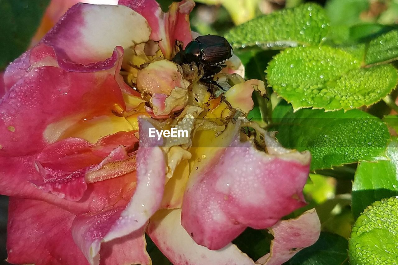 animals in the wild, animal themes, nature, growth, one animal, insect, leaf, no people, close-up, petal, flower, plant, drop, beauty in nature, day, outdoors, fragility, freshness, animal wildlife, flower head