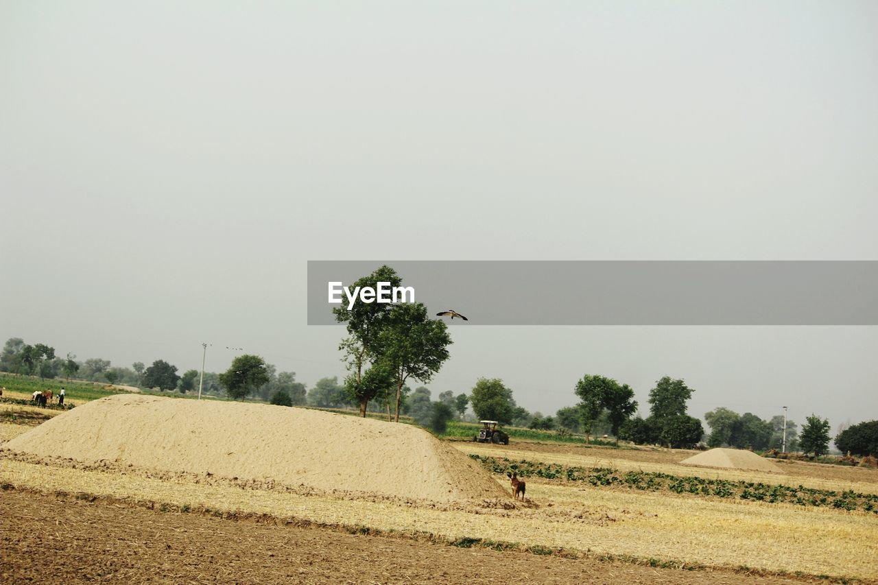 landscape, sky, field, tree, environment, plant, land, copy space, animal themes, clear sky, nature, animal, mammal, rural scene, agriculture, domestic animals, day, vertebrate, no people, livestock, outdoors, herbivorous