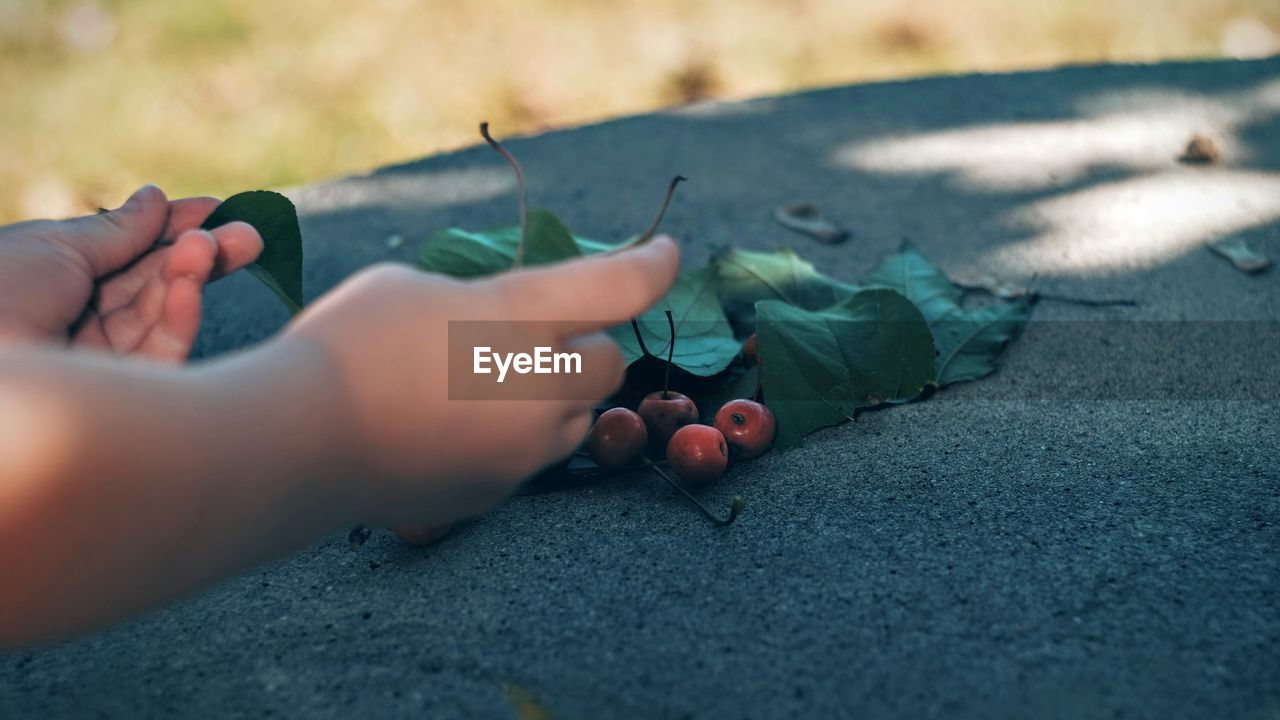 Cropped Image Of Hands Arranging Berries And Leaf On Rock