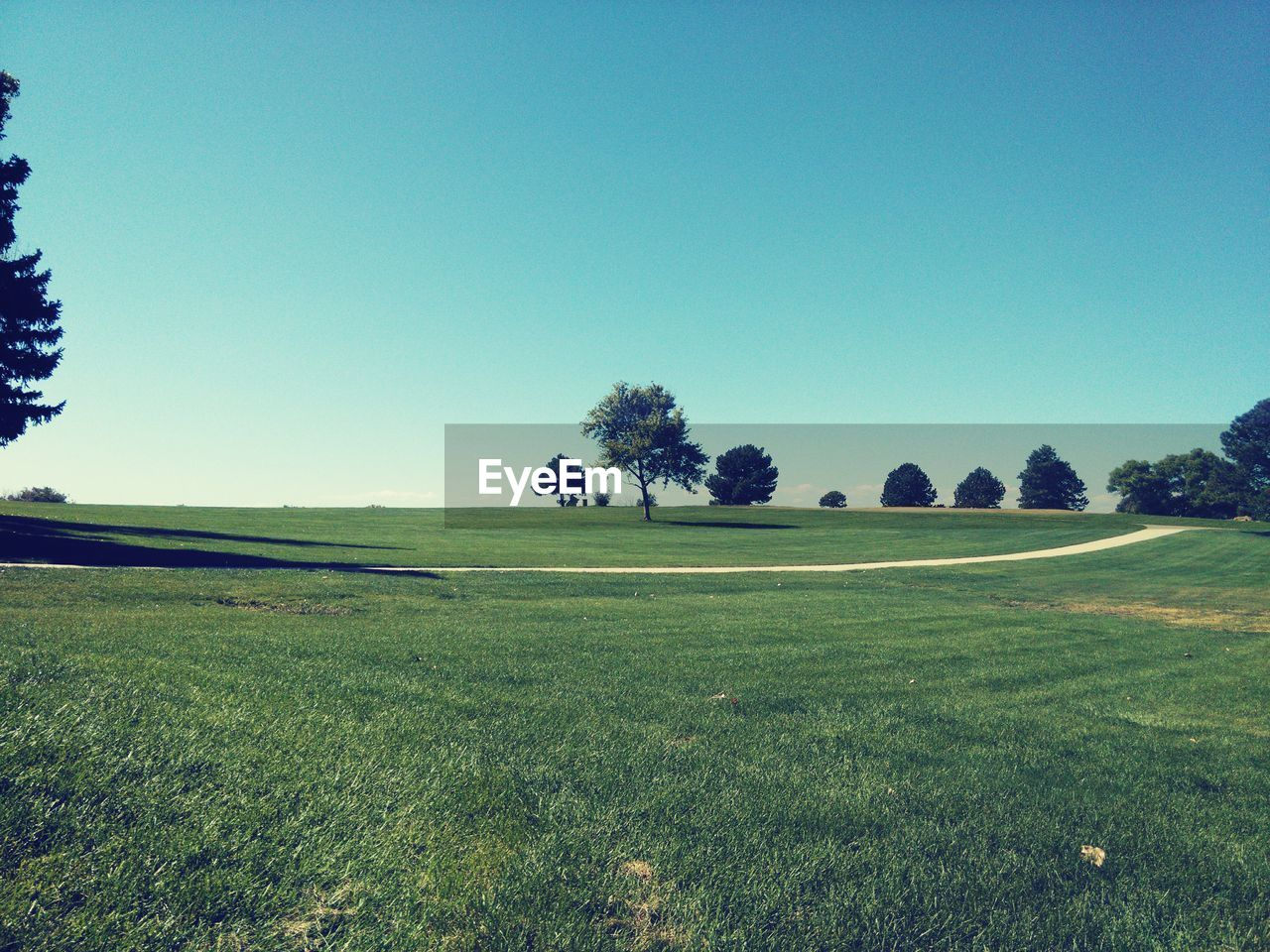 field, grass, clear sky, nature, tranquil scene, landscape, tree, beauty in nature, tranquility, copy space, scenics, green color, no people, day, blue, growth, outdoors, golf course, golf, rural scene, blue sky, green - golf course, sky
