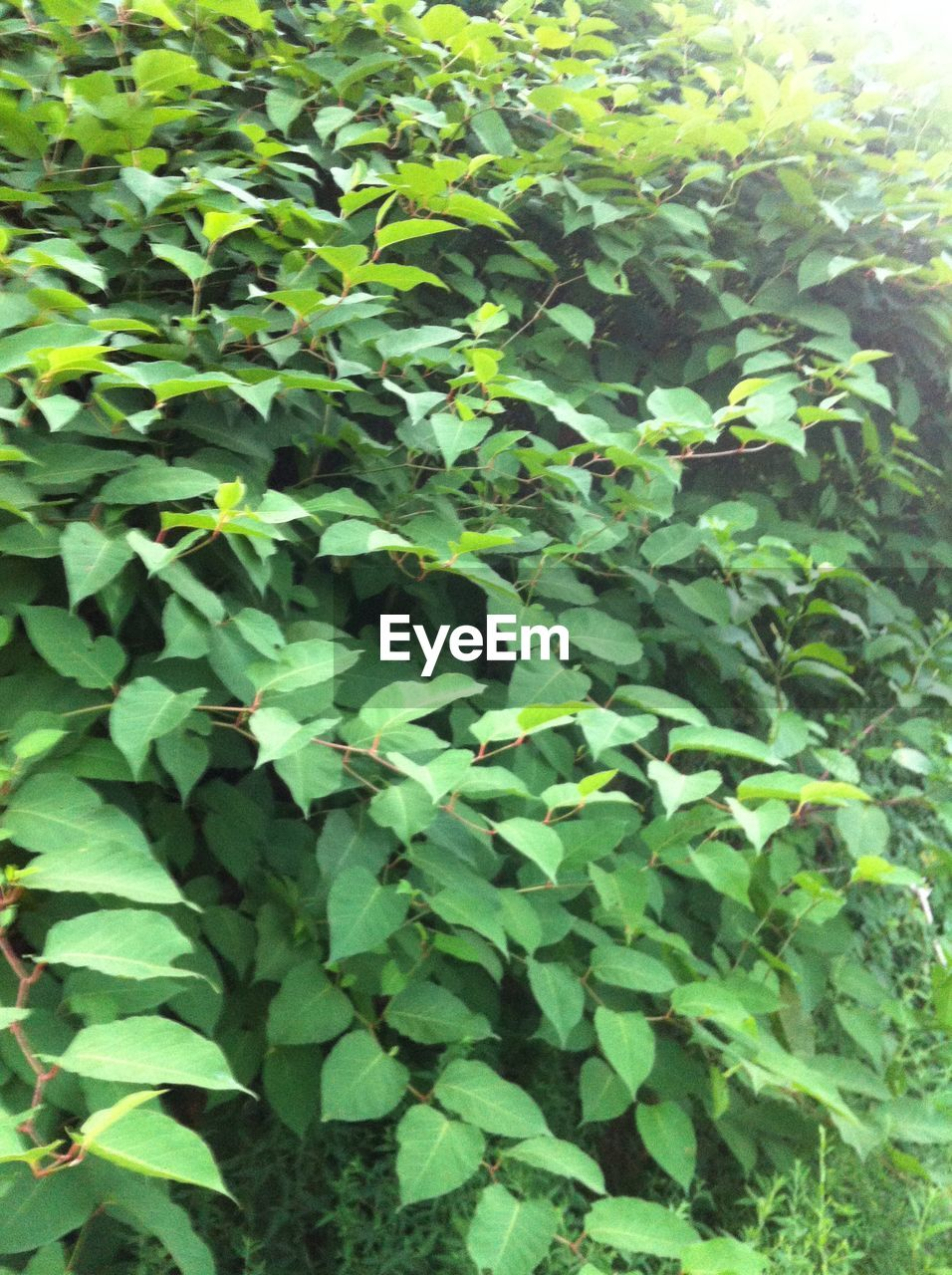 plant, growth, green color, leaf, nature, no people, day, outdoors, close-up, freshness, beauty in nature