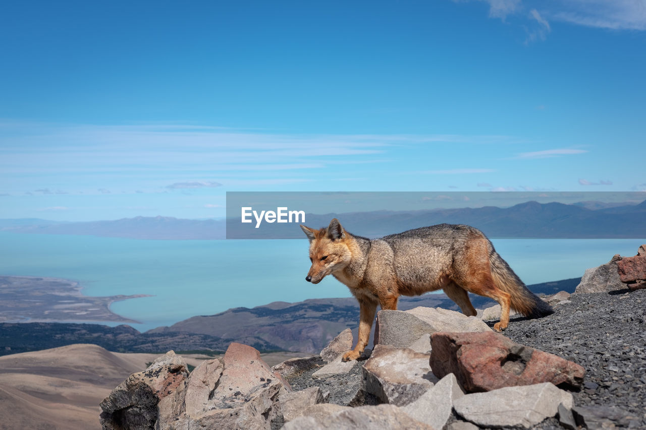 one animal, rock, rock - object, mammal, animal, animal themes, solid, vertebrate, nature, domestic animals, day, mountain, beauty in nature, domestic, pets, no people, scenics - nature, sky, water, outdoors