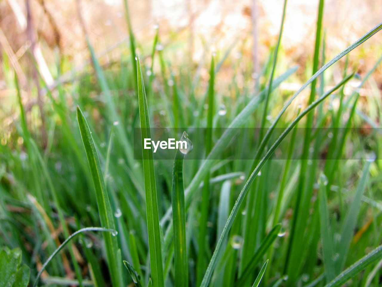 plant, green color, growth, drop, grass, nature, beauty in nature, water, selective focus, freshness, wet, blade of grass, land, close-up, day, field, no people, dew, fragility, outdoors, purity, rain, raindrop