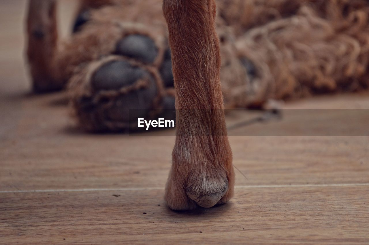 low section, indoors, wood - material, brown, close-up, no people, animal leg, day, animal themes, domestic animals, mammal