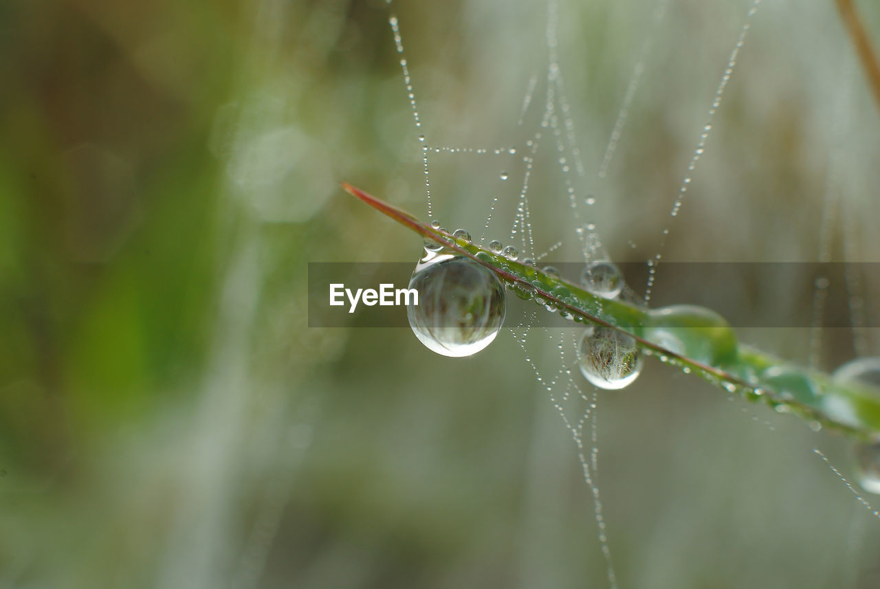 plant, drop, water, close-up, nature, beauty in nature, wet, growth, focus on foreground, green color, fragility, day, vulnerability, selective focus, no people, plant part, leaf, spider web, outdoors, raindrop, dew, rain, rainy season, blade of grass, purity