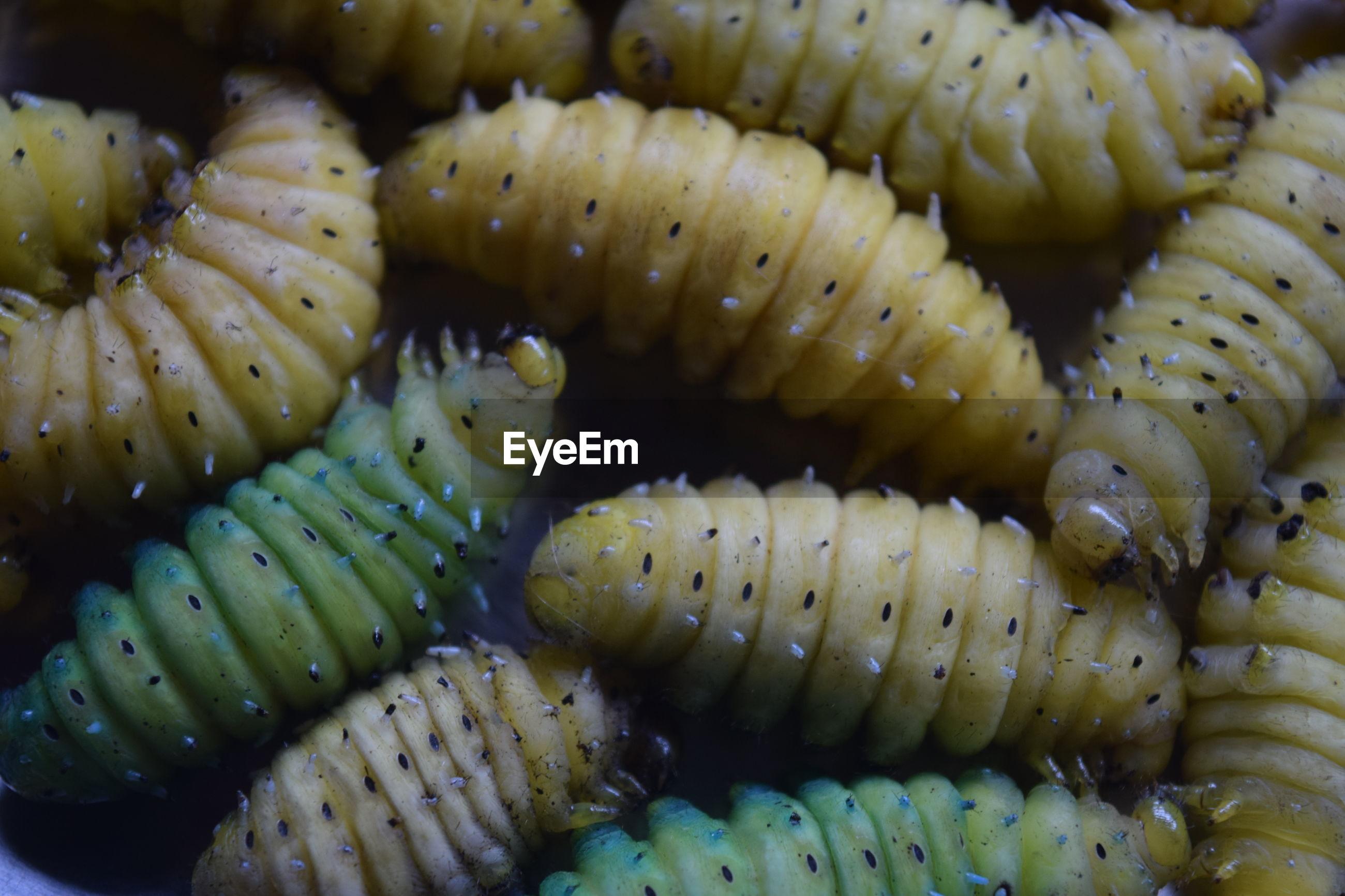 Full frame shot of worms