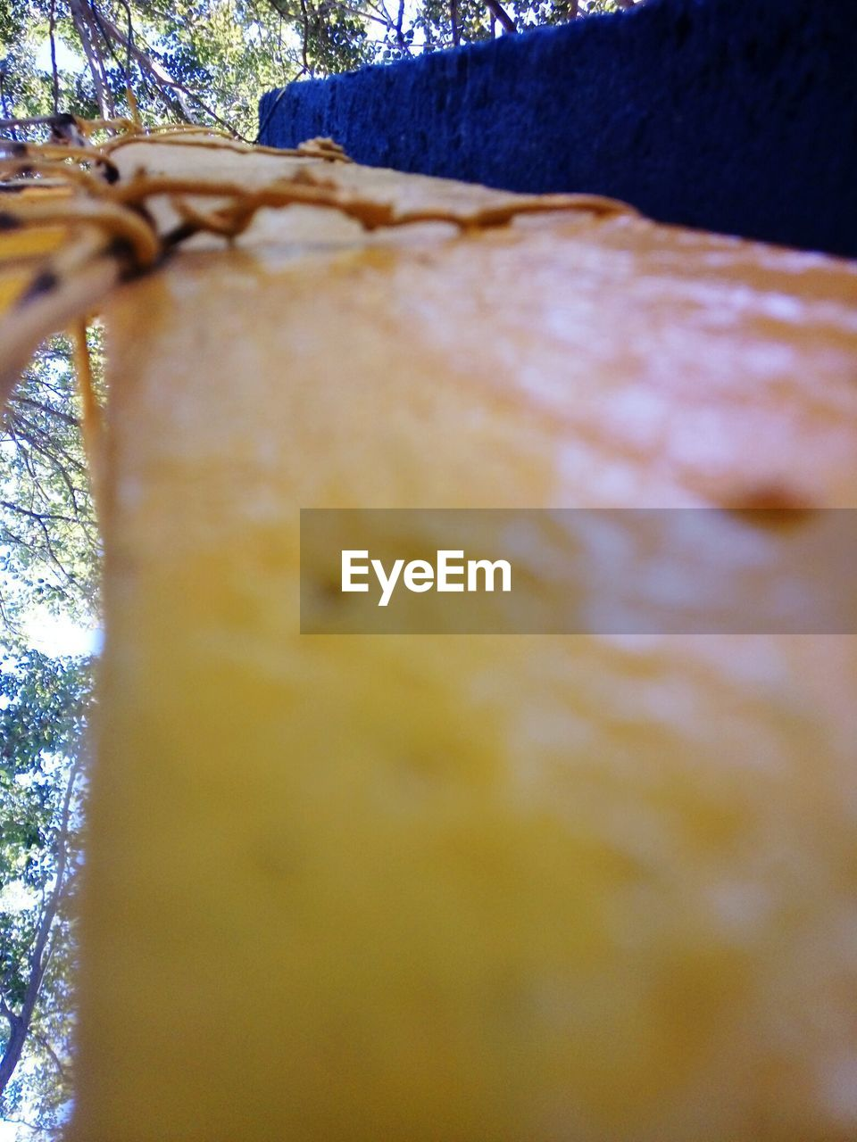 selective focus, no people, close-up, tree trunk, tree, day, outdoors, nature, food, freshness