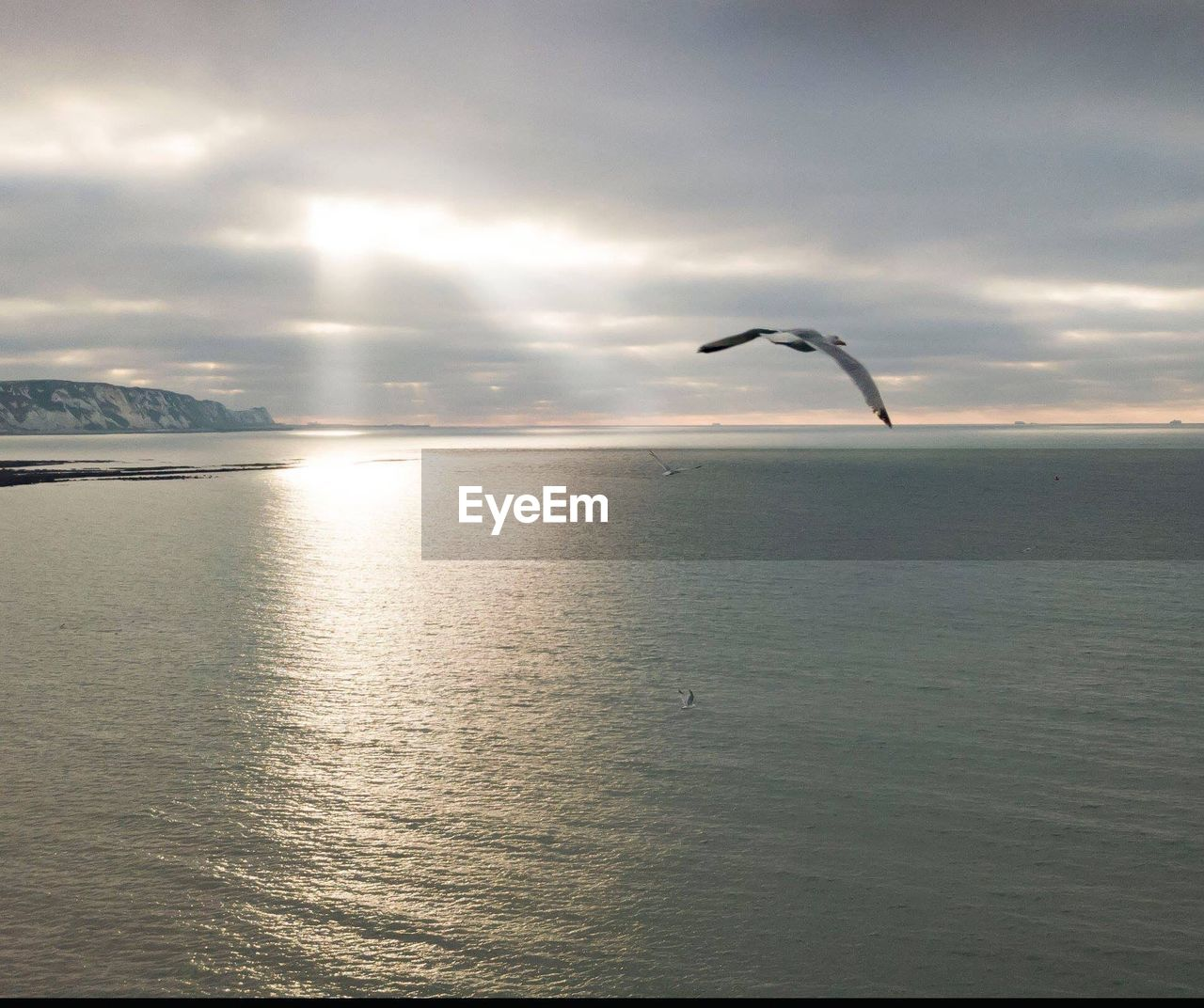 cloud - sky, sky, water, vertebrate, animal, animal themes, sea, bird, animals in the wild, animal wildlife, beauty in nature, flying, scenics - nature, one animal, nature, tranquil scene, no people, waterfront, tranquility, horizon over water, outdoors, seagull