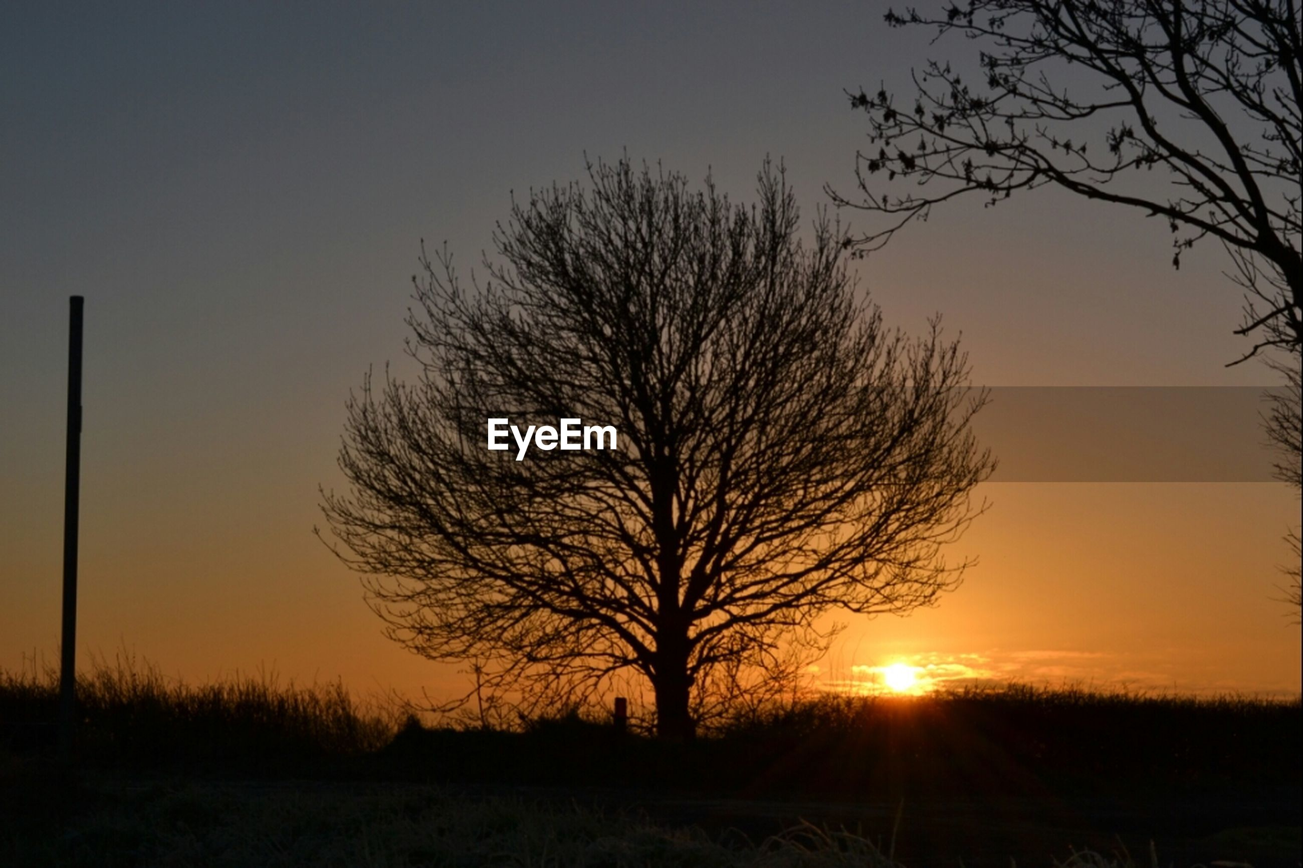 sunset, bare tree, silhouette, sun, tranquil scene, tranquility, scenics, tree, beauty in nature, landscape, orange color, branch, nature, sky, idyllic, field, sunlight, clear sky, outdoors, back lit