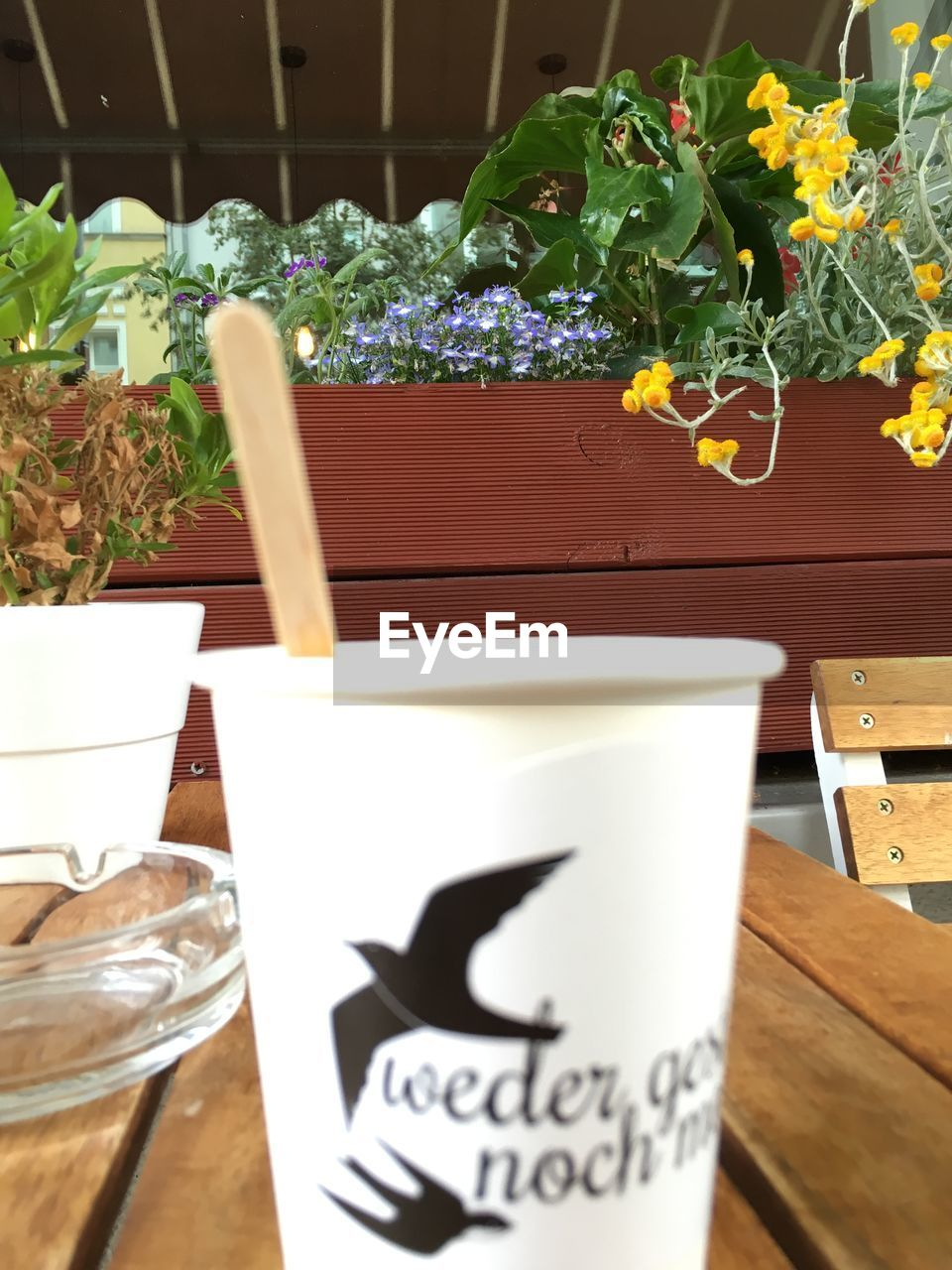plant, potted plant, freshness, food and drink, nature, table, growth, no people, refreshment, drink, close-up, indoors, text, communication, cup, leaf, plant part, flower, wood - material, glass, flower pot