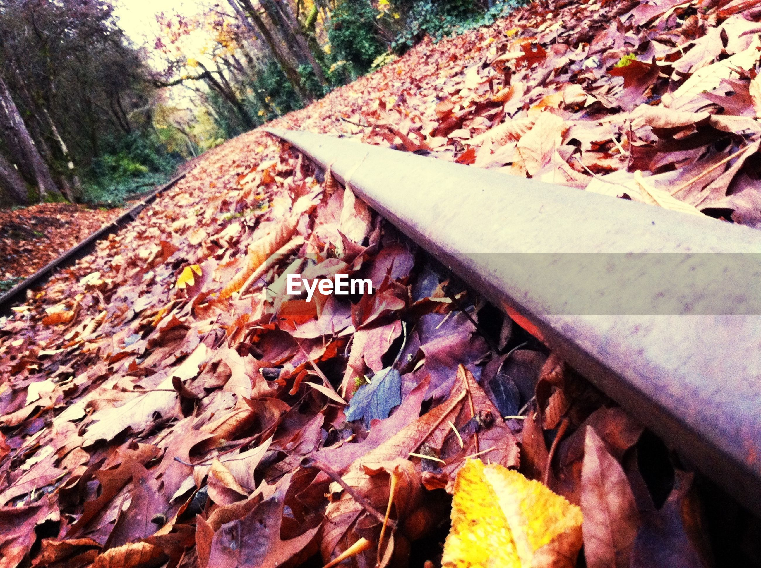 autumn, leaf, change, season, leaves, dry, fallen, nature, day, tree, outdoors, tranquility, close-up, falling, no people, fall, field, high angle view, surface level, wood - material
