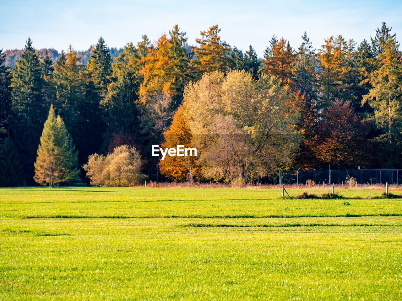 Trees on landscape during autumn