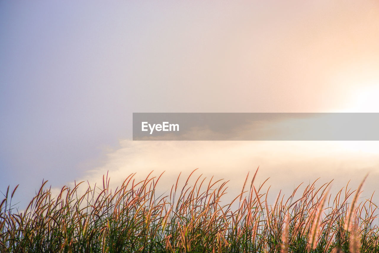 sky, beauty in nature, tranquility, growth, plant, nature, cloud - sky, tranquil scene, sunset, no people, scenics - nature, sunlight, sun, field, land, outdoors, non-urban scene, idyllic, environment, day, timothy grass, stalk