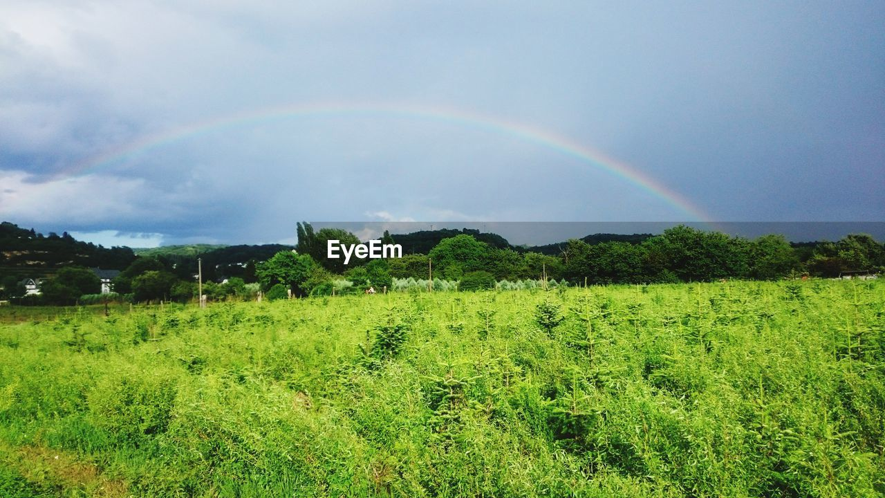 plant, rainbow, beauty in nature, scenics - nature, tree, tranquility, landscape, environment, green color, tranquil scene, field, nature, growth, sky, land, cloud - sky, no people, day, grass, double rainbow, outdoors