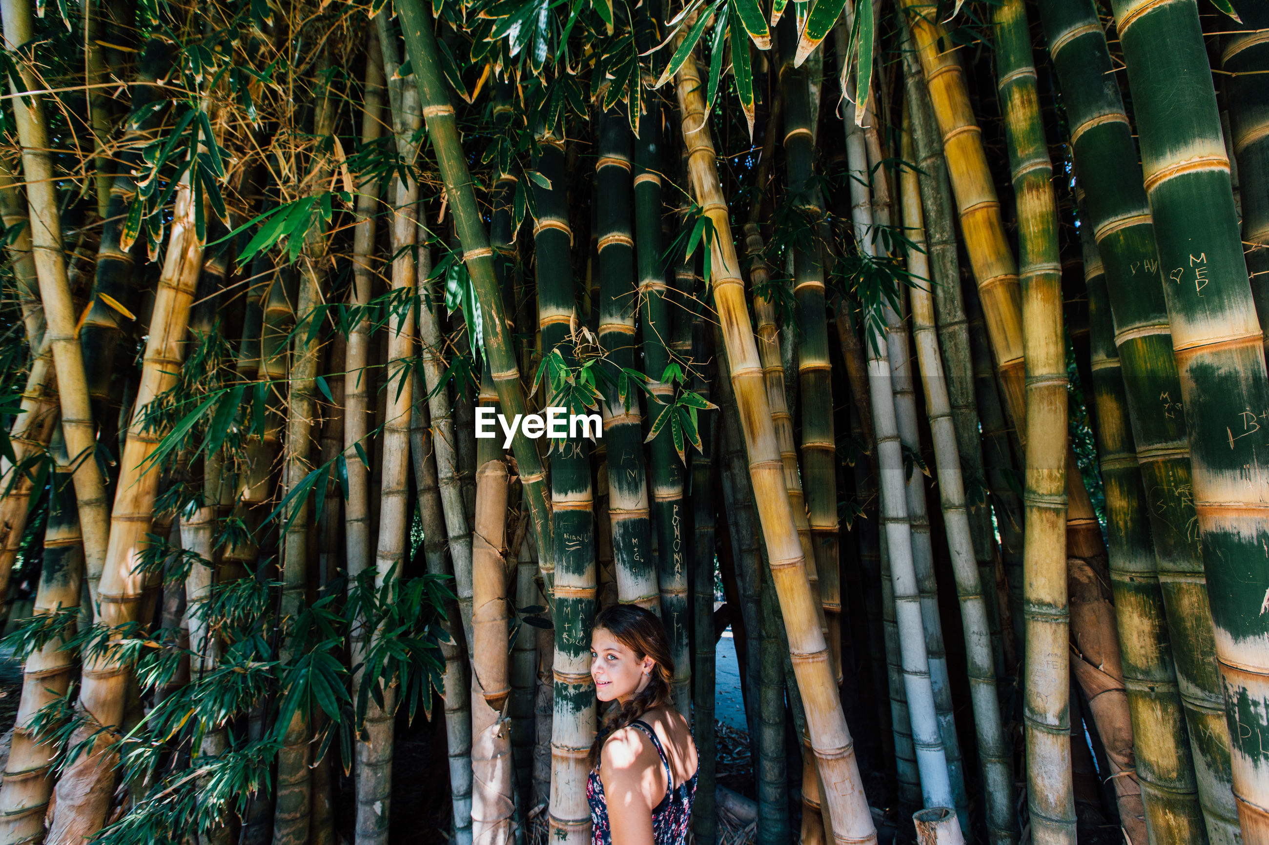 Girl standing by bamboo trees in forest