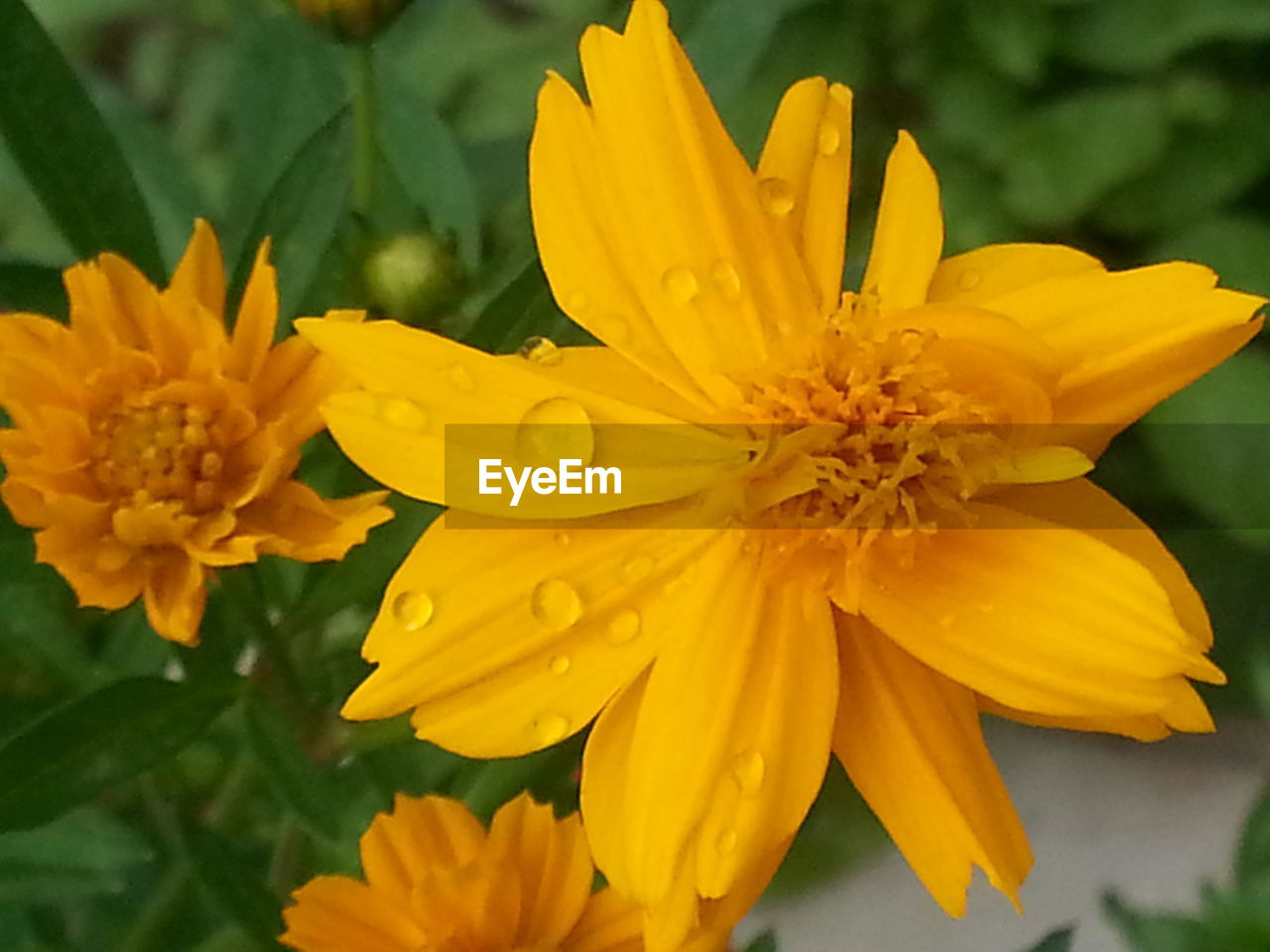 flower, petal, fragility, freshness, flower head, beauty in nature, yellow, nature, growth, blooming, plant, outdoors, day, close-up, no people, focus on foreground, pollen, park - man made space