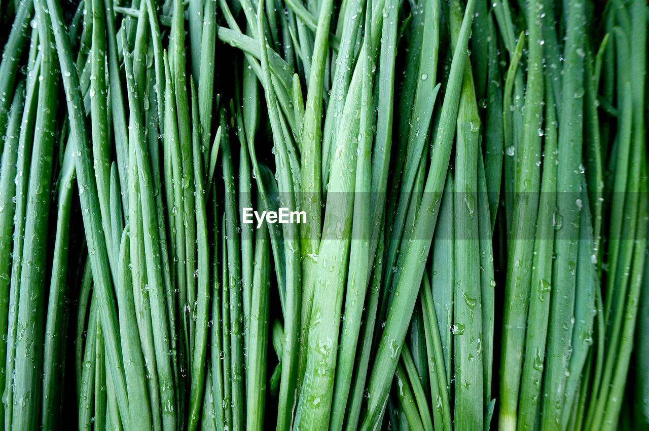 Full frame shot of green vegetables for sale