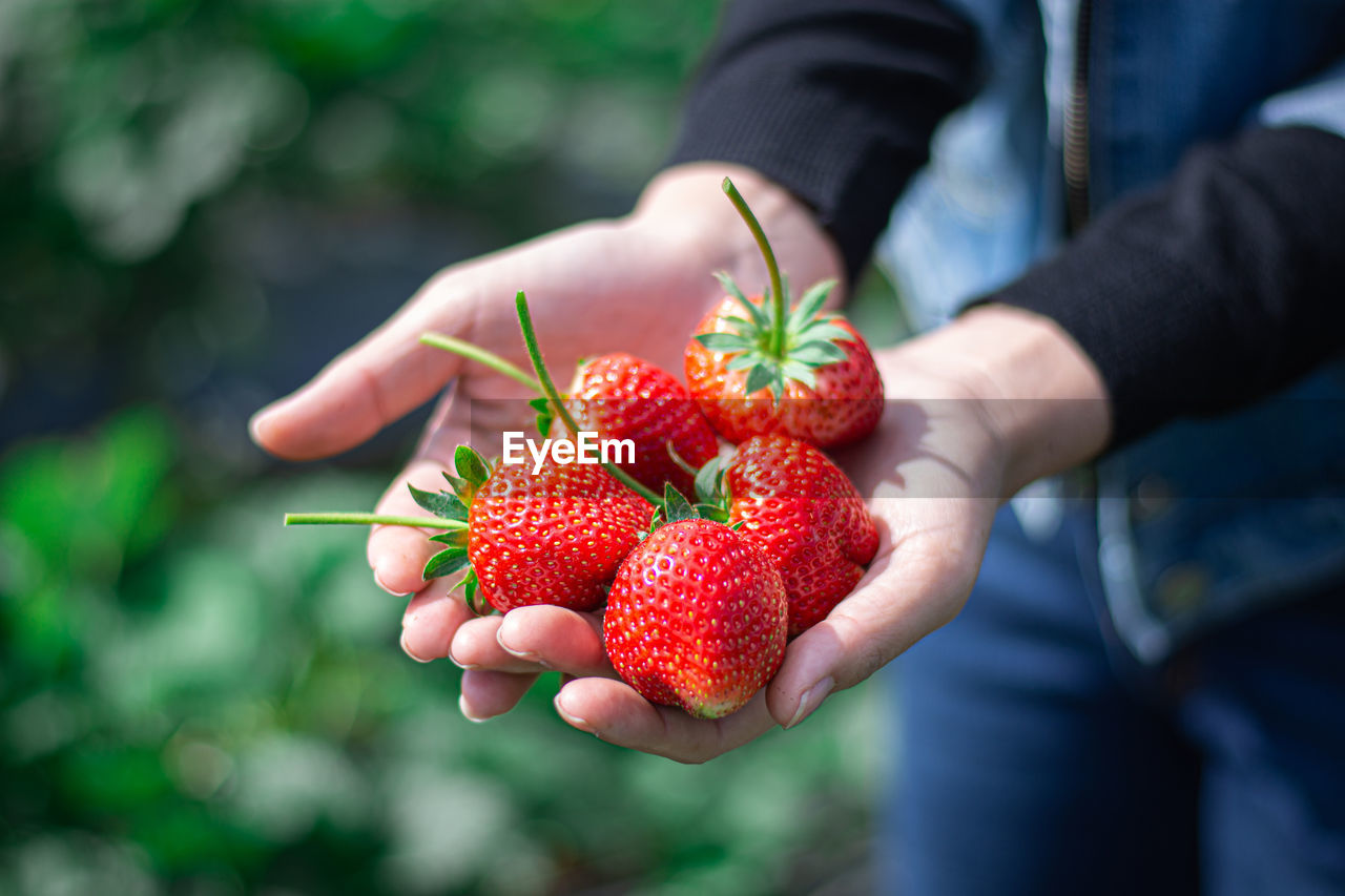 fruit, human hand, red, berry fruit, real people, healthy eating, one person, hand, holding, strawberry, freshness, food and drink, wellbeing, food, human body part, day, focus on foreground, lifestyles, midsection, outdoors, ripe, finger
