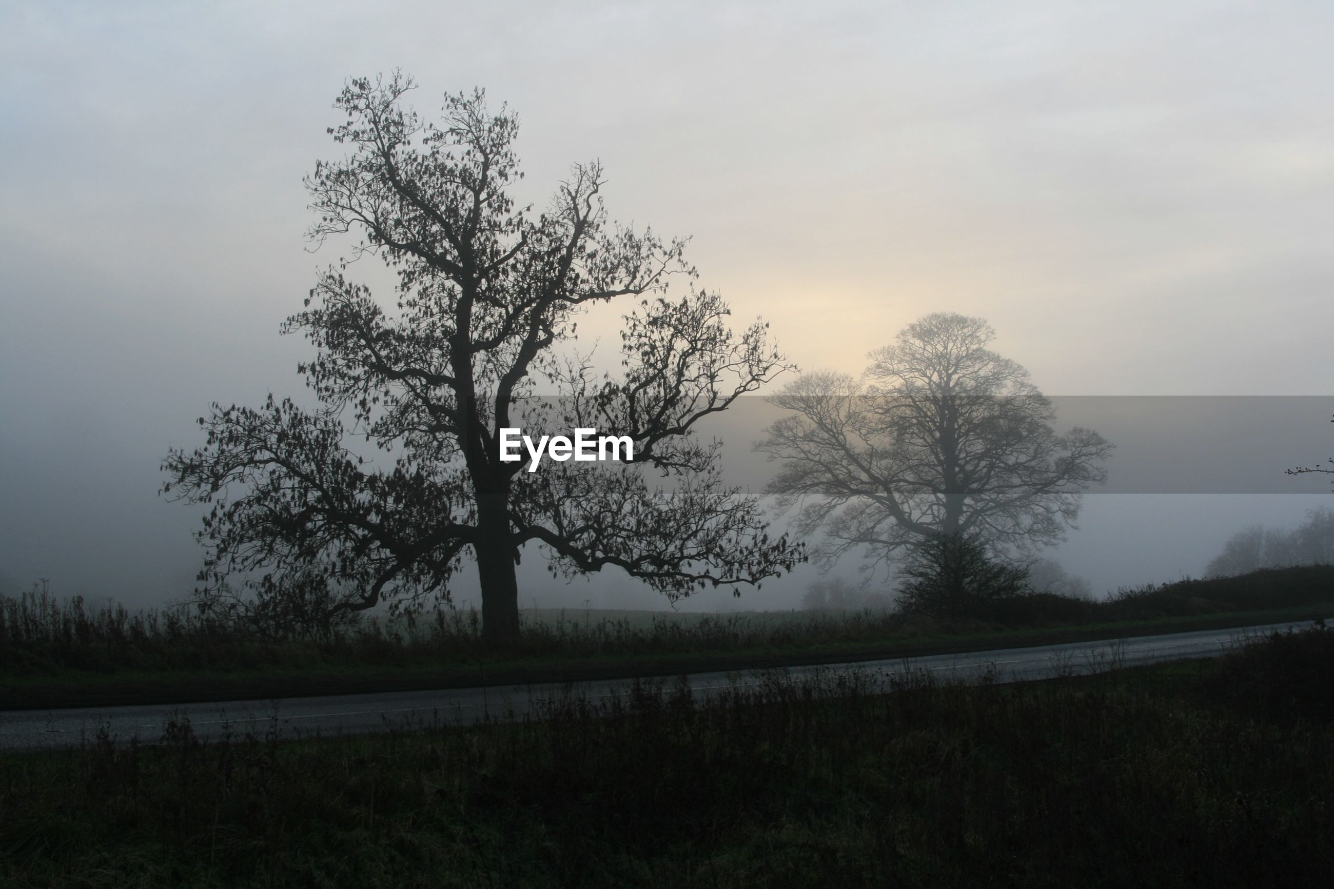 Silhouette trees on field in foggy weather