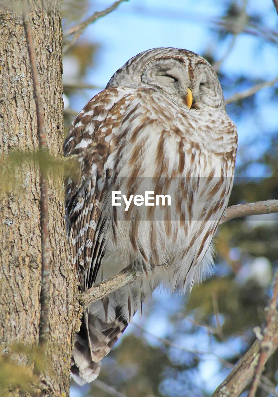 animals in the wild, animal themes, bird, animal, animal wildlife, tree, vertebrate, one animal, perching, focus on foreground, plant, branch, bird of prey, no people, day, tree trunk, trunk, close-up, nature, outdoors, eagle