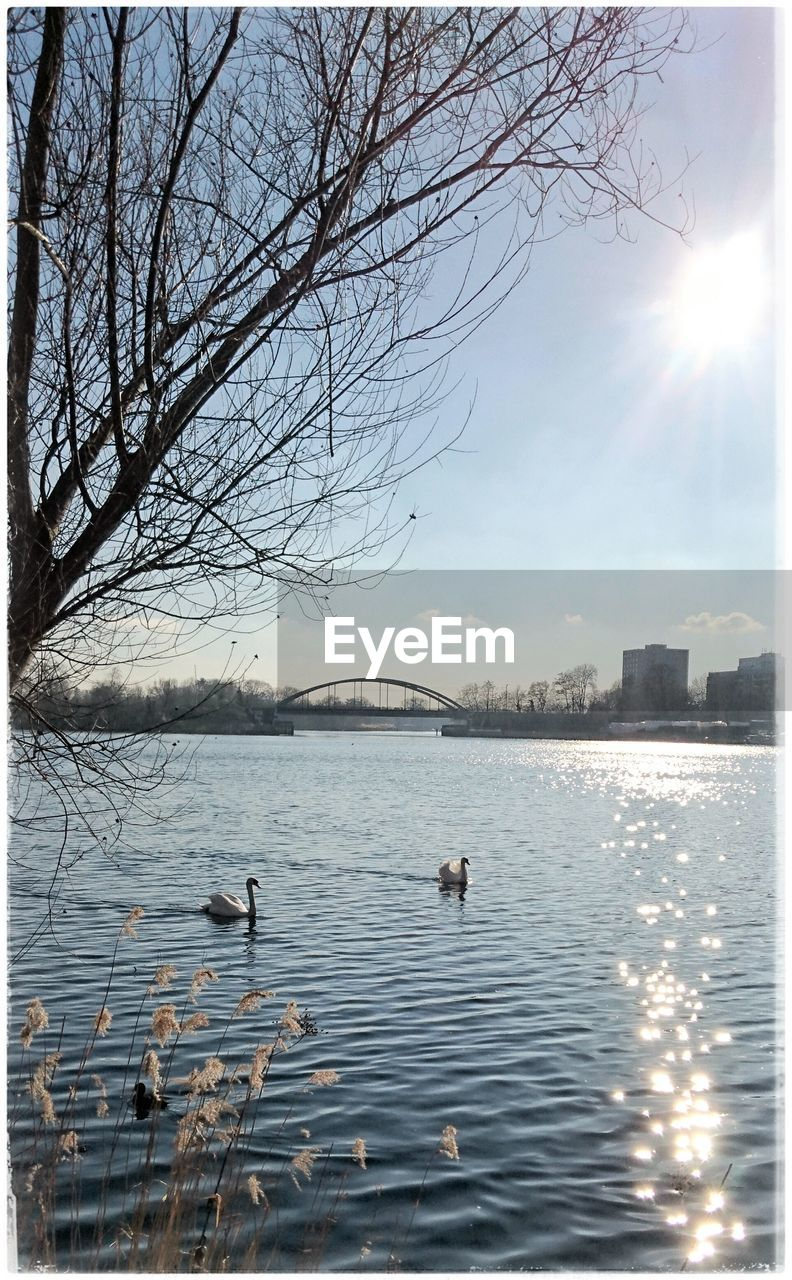 water, bare tree, sky, waterfront, nature, lake, reflection, tree, outdoors, built structure, branch, tranquility, beauty in nature, no people, architecture, scenics, sunlight, day, swan, swimming, bird, building exterior, sunset, animal themes, animals in the wild, city