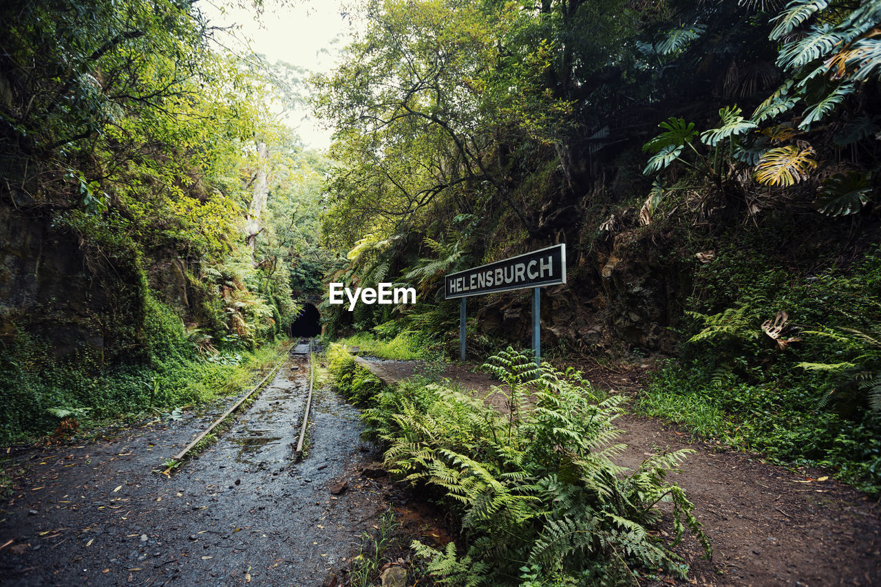 tree, plant, forest, sign, communication, direction, text, road, nature, day, land, growth, information, transportation, the way forward, footpath, western script, guidance, green color, outdoors, no people, trail