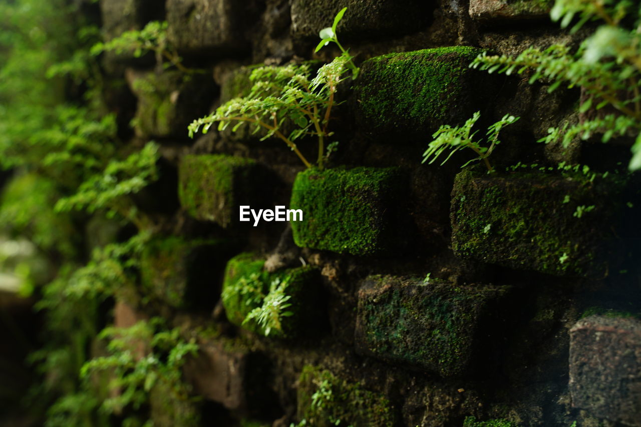 green color, no people, moss, plant, close-up, growth, full frame, textured, day, selective focus, nature, outdoors, backgrounds, pattern, architecture, abandoned, focus on foreground, wall - building feature, beauty in nature, weathered, lichen