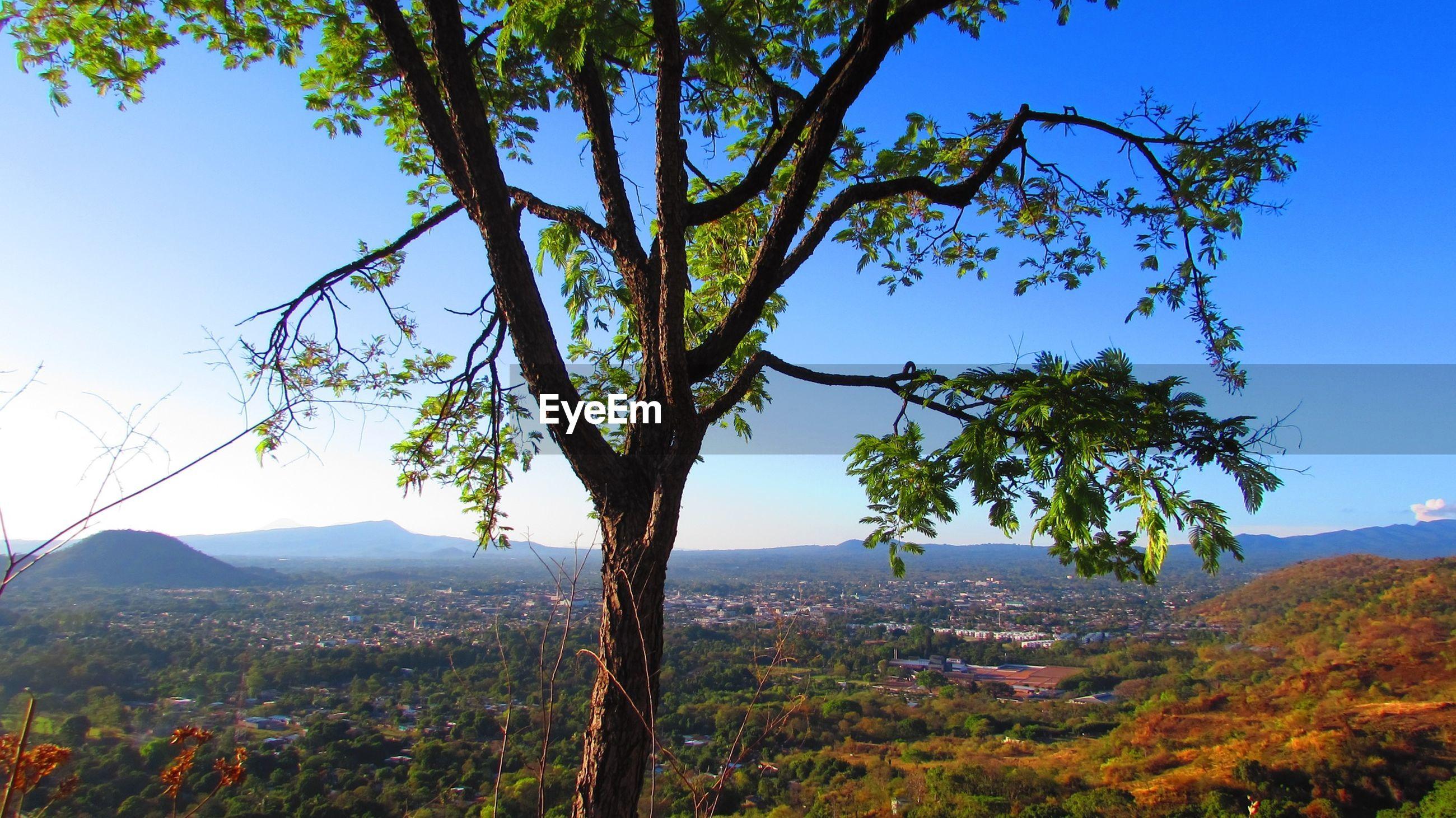 Tree on filed against sky