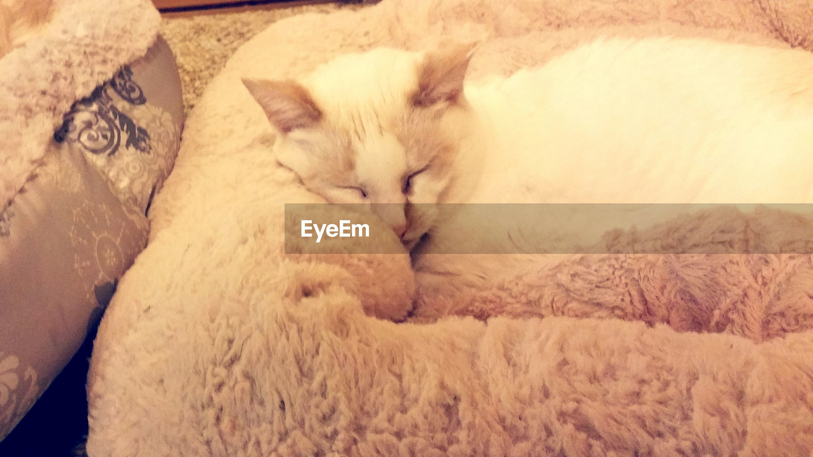 animal themes, mammal, domestic animals, indoors, one animal, relaxation, pets, sleeping, resting, lying down, high angle view, no people, domestic cat, feline, eyes closed, cat, zoology, bed, two animals, close-up