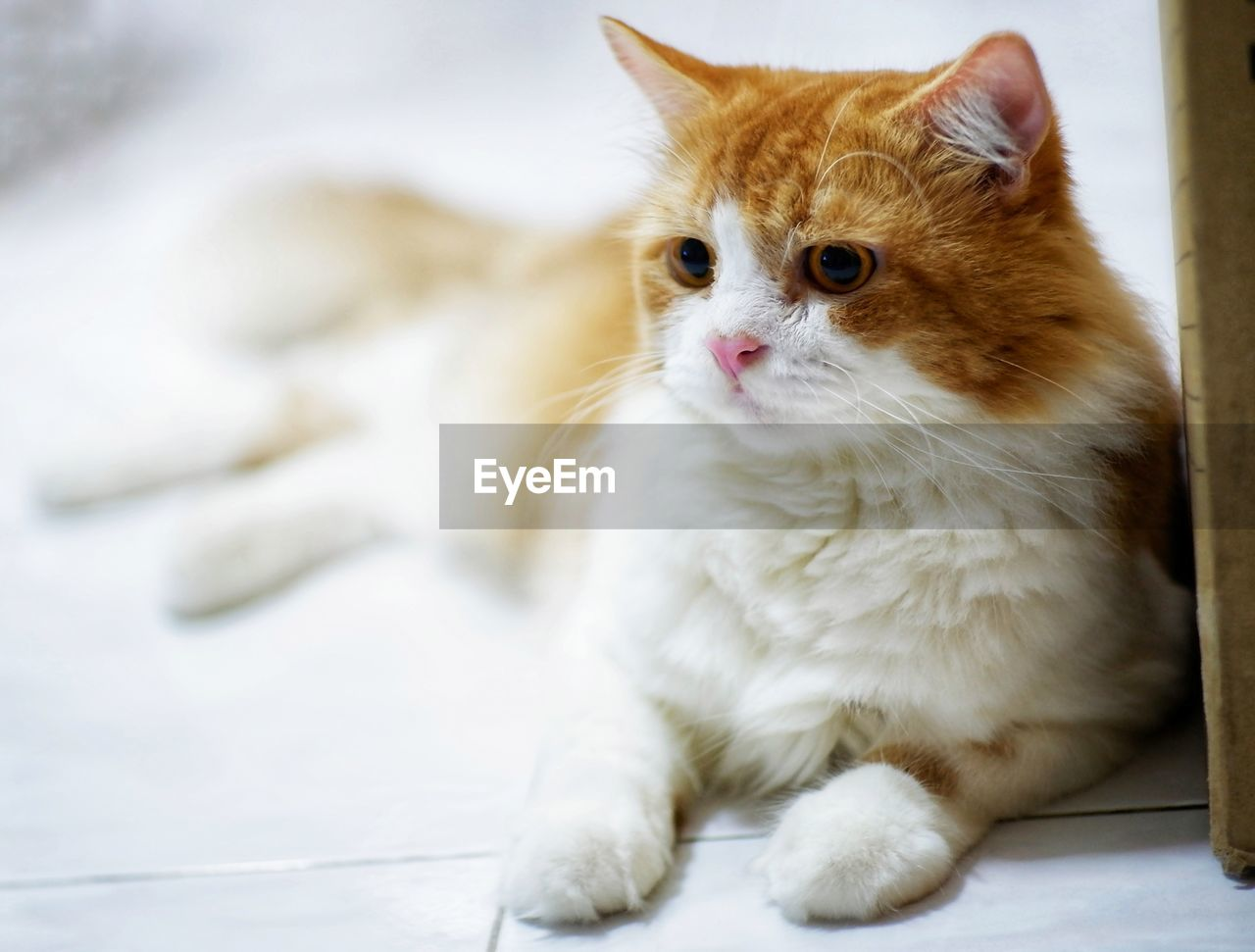 Close-up of cat looking away on floor