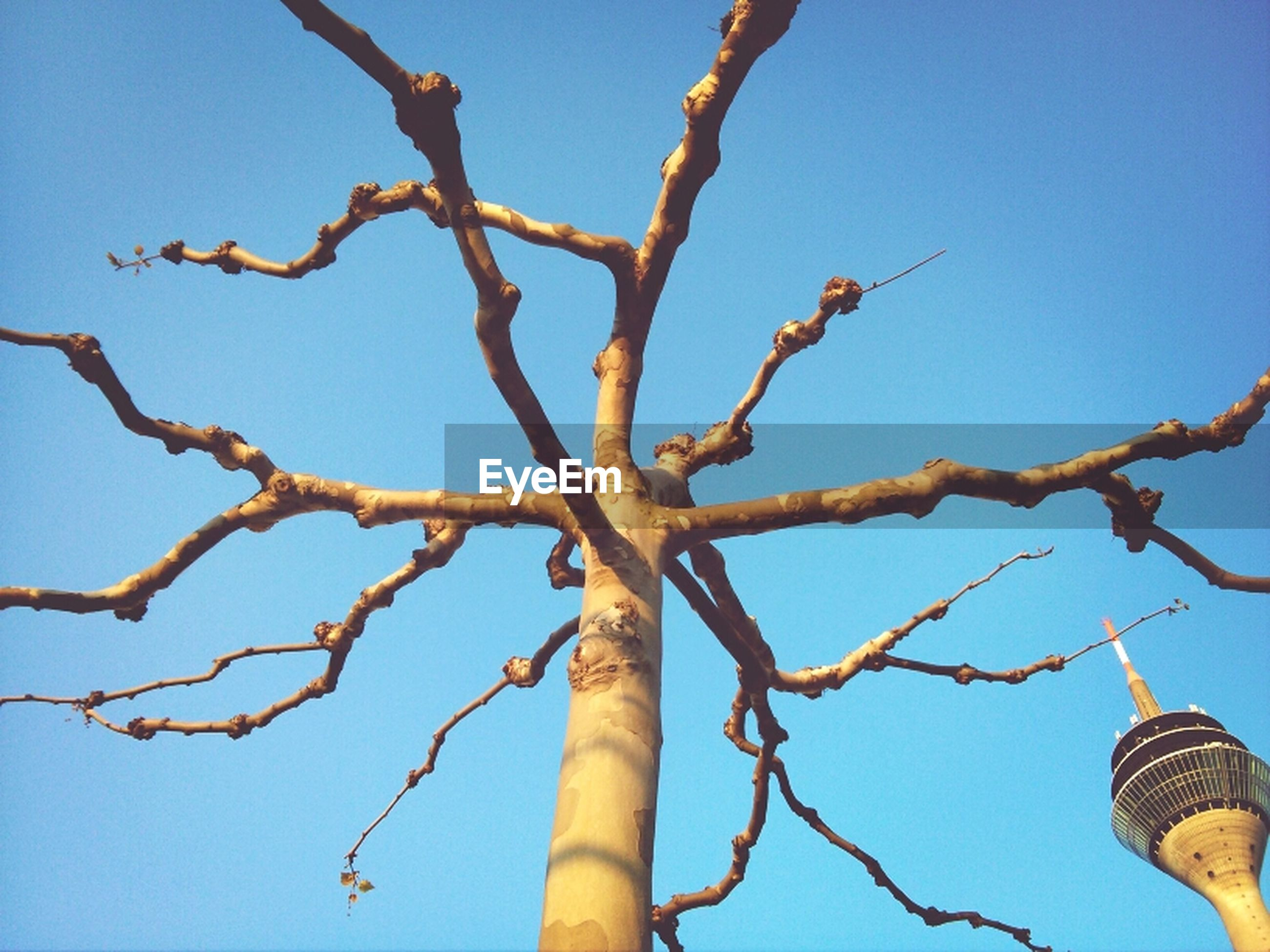 low angle view, clear sky, branch, tree, blue, bare tree, nature, sky, day, outdoors, no people, growth, tree trunk, part of, bird, high section, sunlight, close-up, beauty in nature, built structure