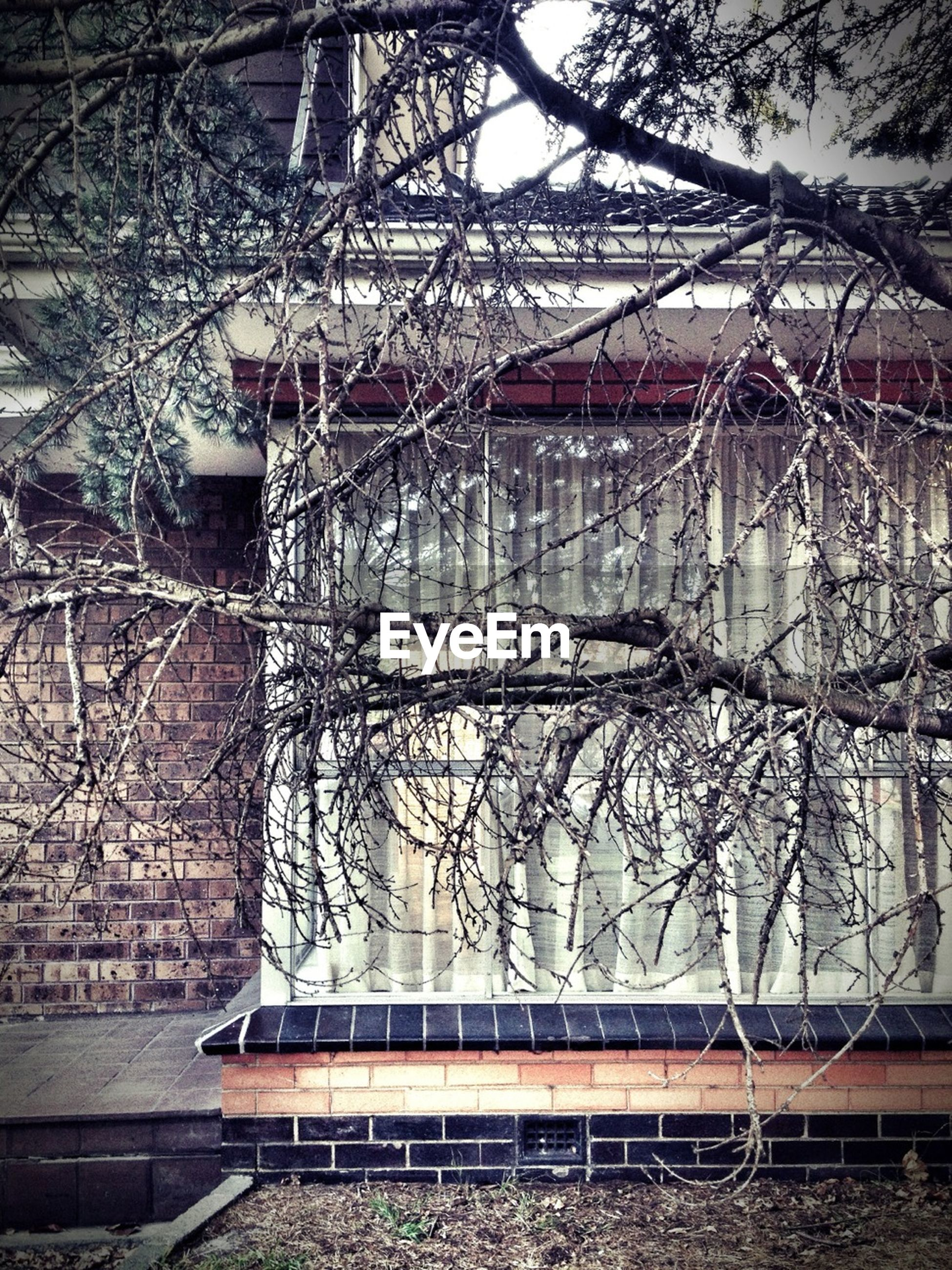 bare tree, built structure, tree, architecture, building exterior, metal, branch, railing, day, abandoned, outdoors, railroad track, no people, connection, fence, house, nature, metallic, winter, season